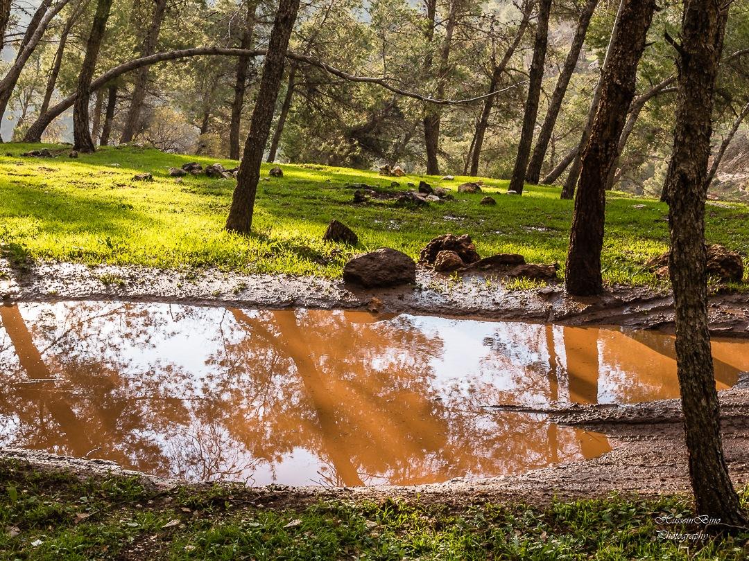 Woodland.  by Hussein Elyas Bino