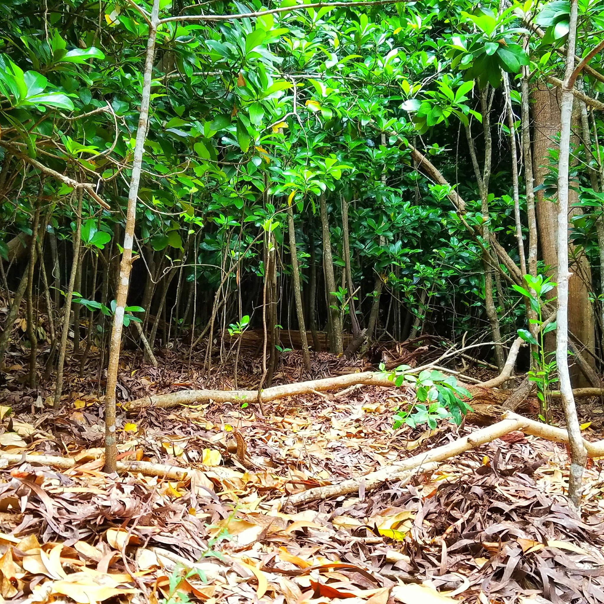 Mini Forest by EvolvingLense