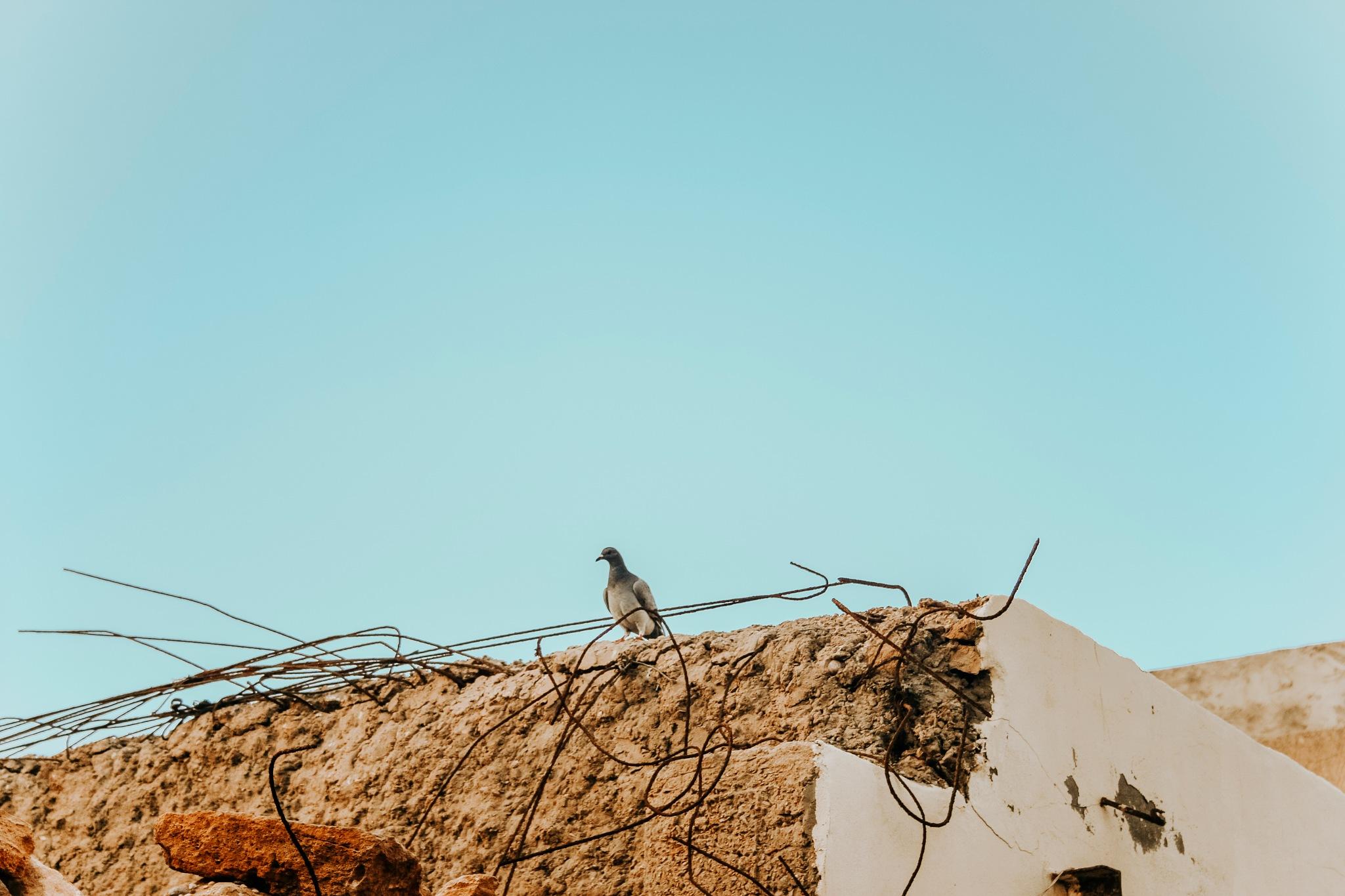 Alone by Abderrahman Ben