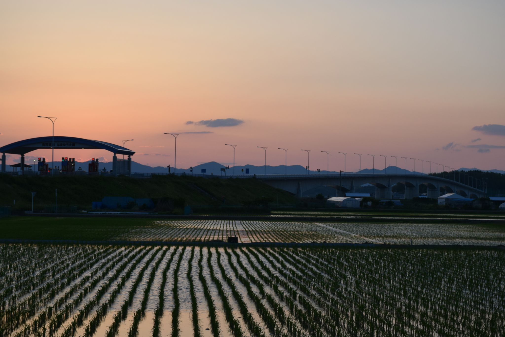 sunset & rice paddy by Keita Asakura