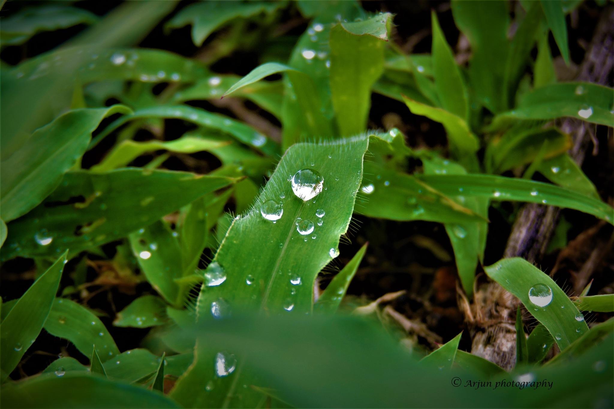 good morning by Arjun Tw