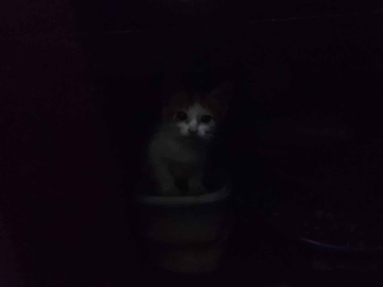 Hey kitty by Ganesh Agasthya