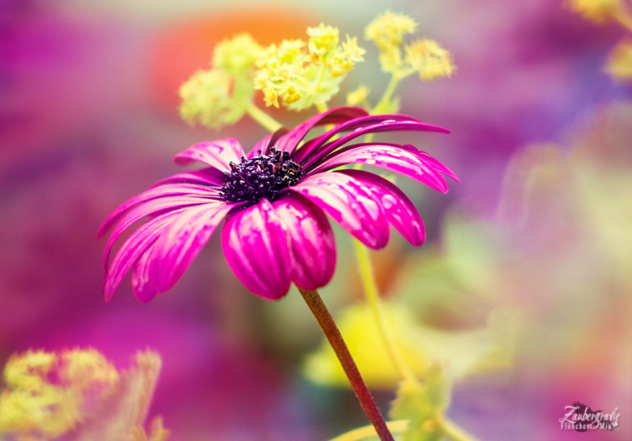 the magic of colors by Zaubergrafie