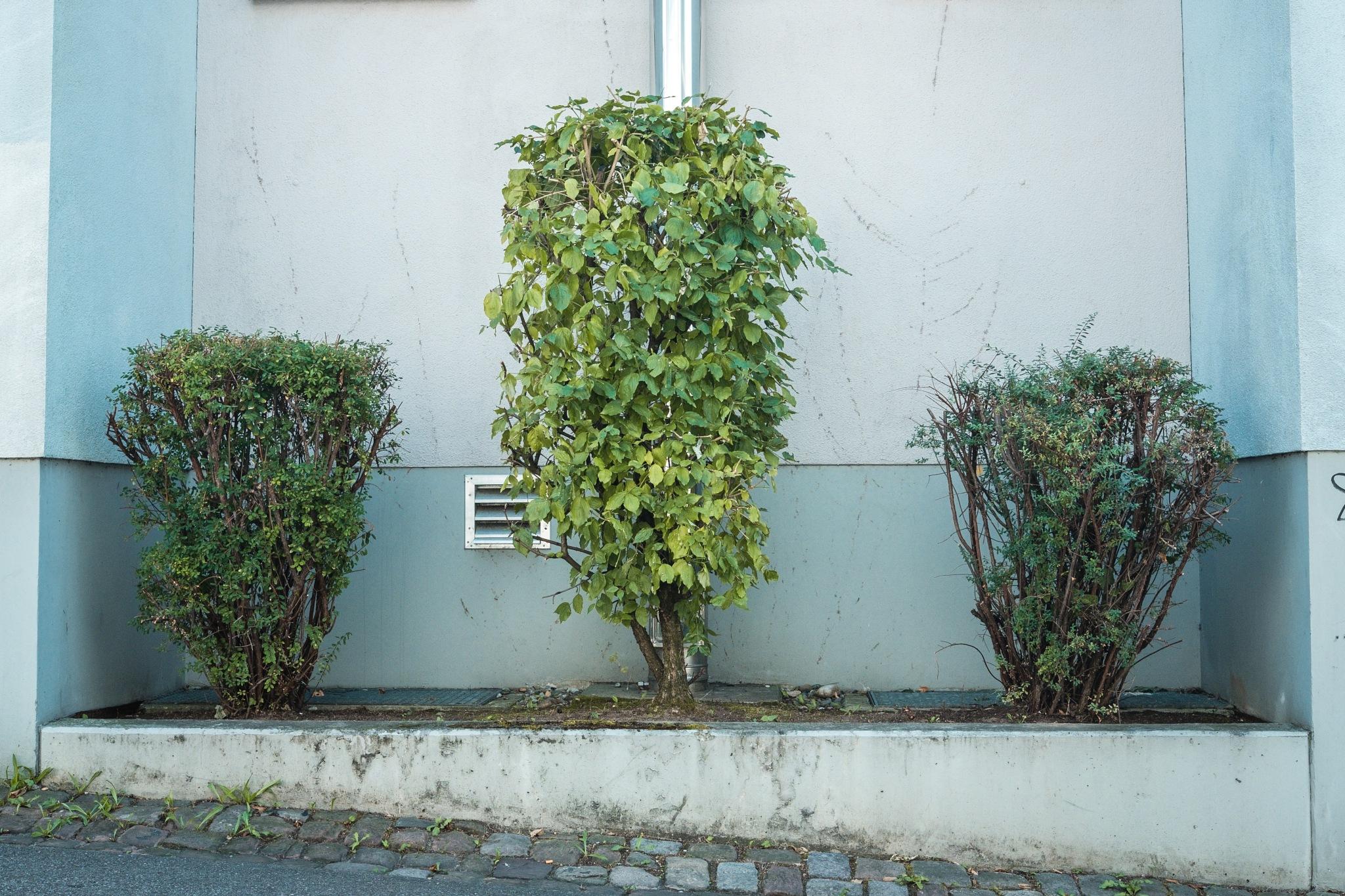 Modern Gardening by krauspop