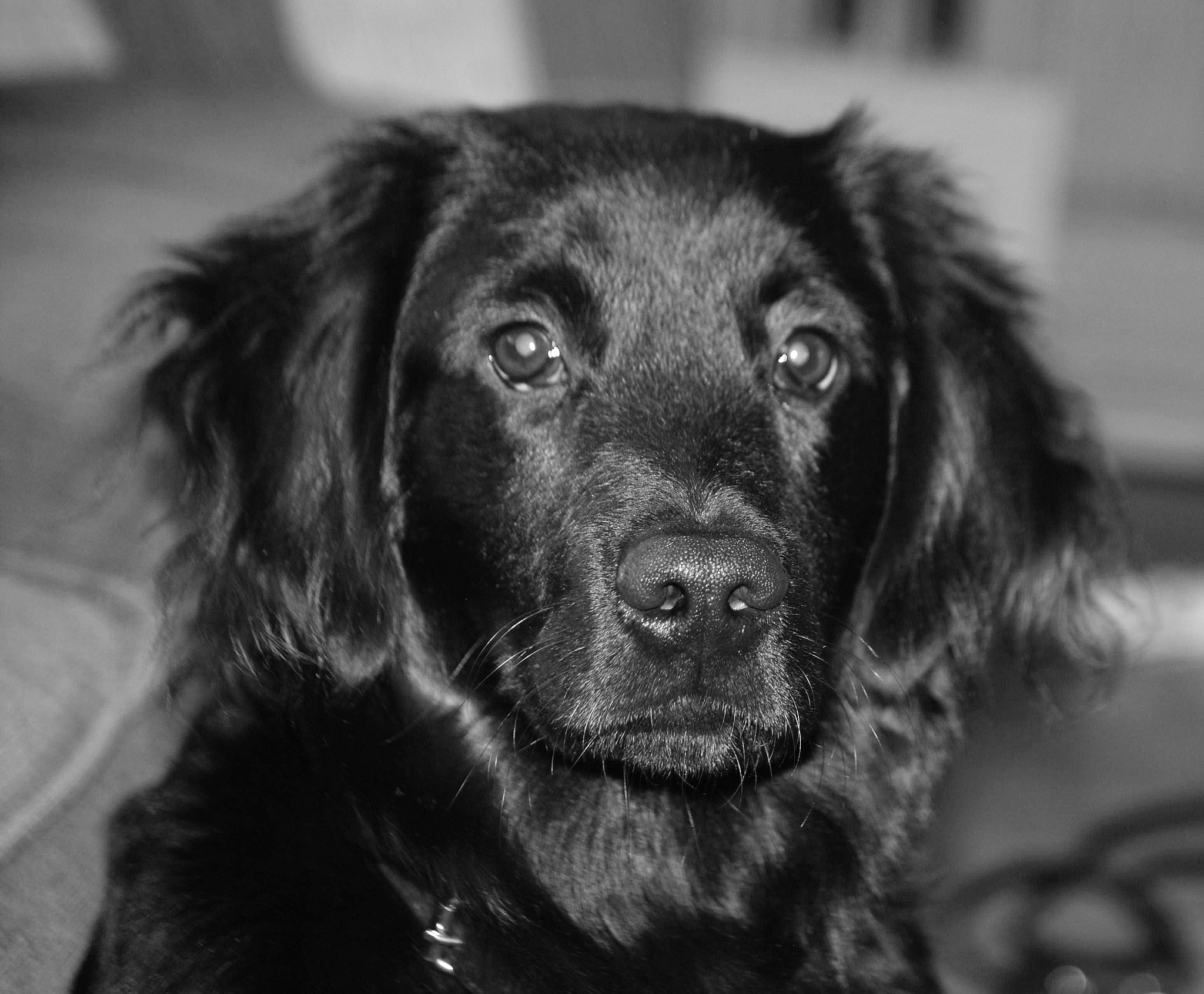 Zep the dog by Riek Muijen