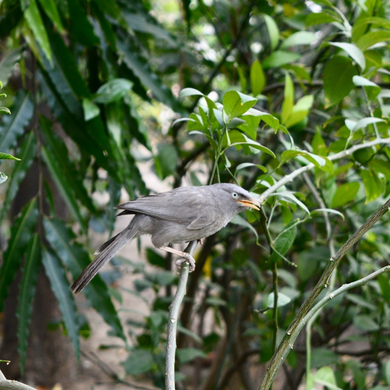 Bird  by NN Photography