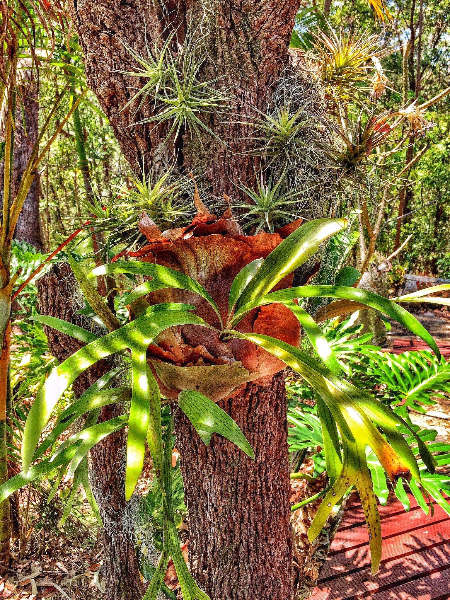 Photo in Still Life #australia #plant tree flower green