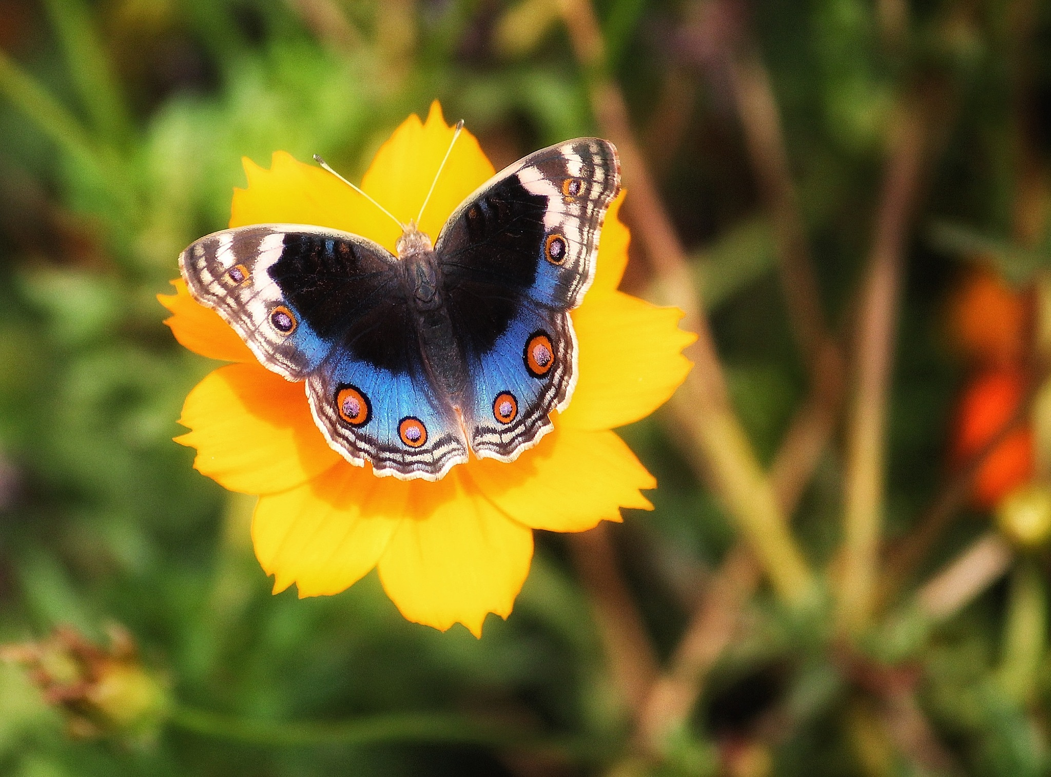 butterfly..  by RAHUL HUMAR