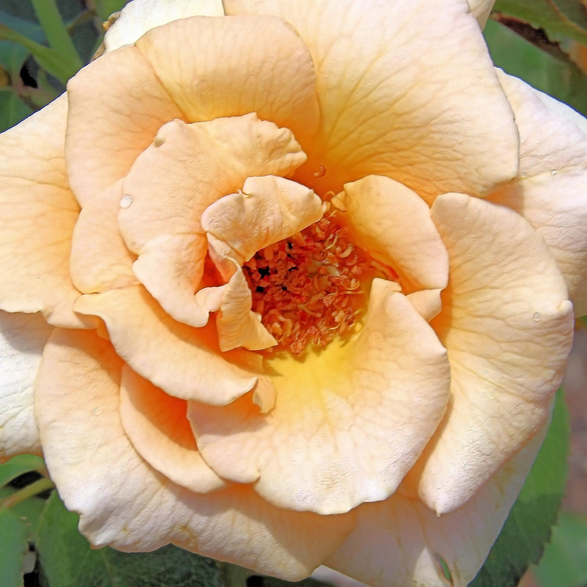 Flower by Abraham Sanchez