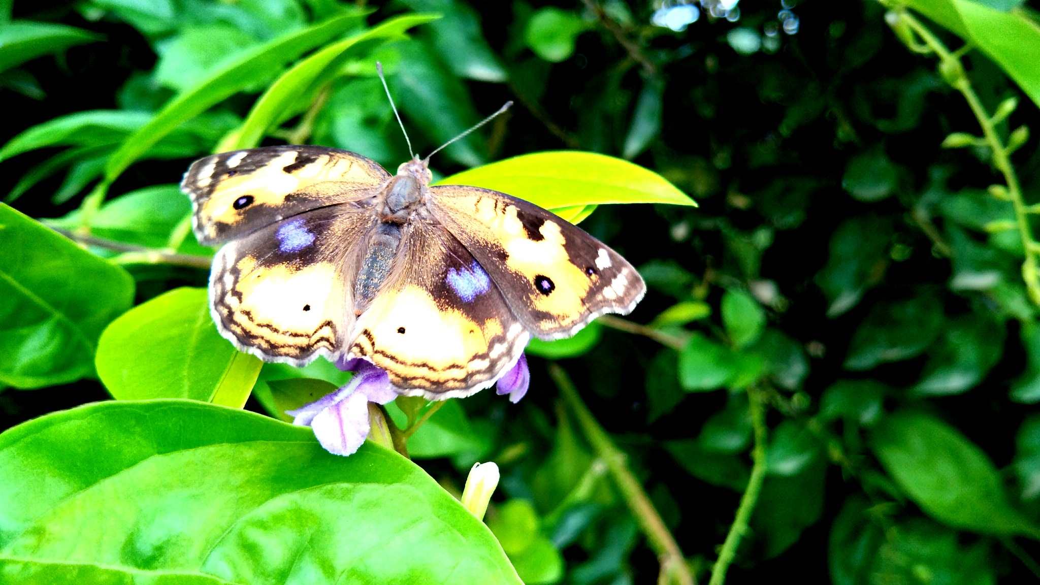the butterfly  by mandeepsinghdeep99
