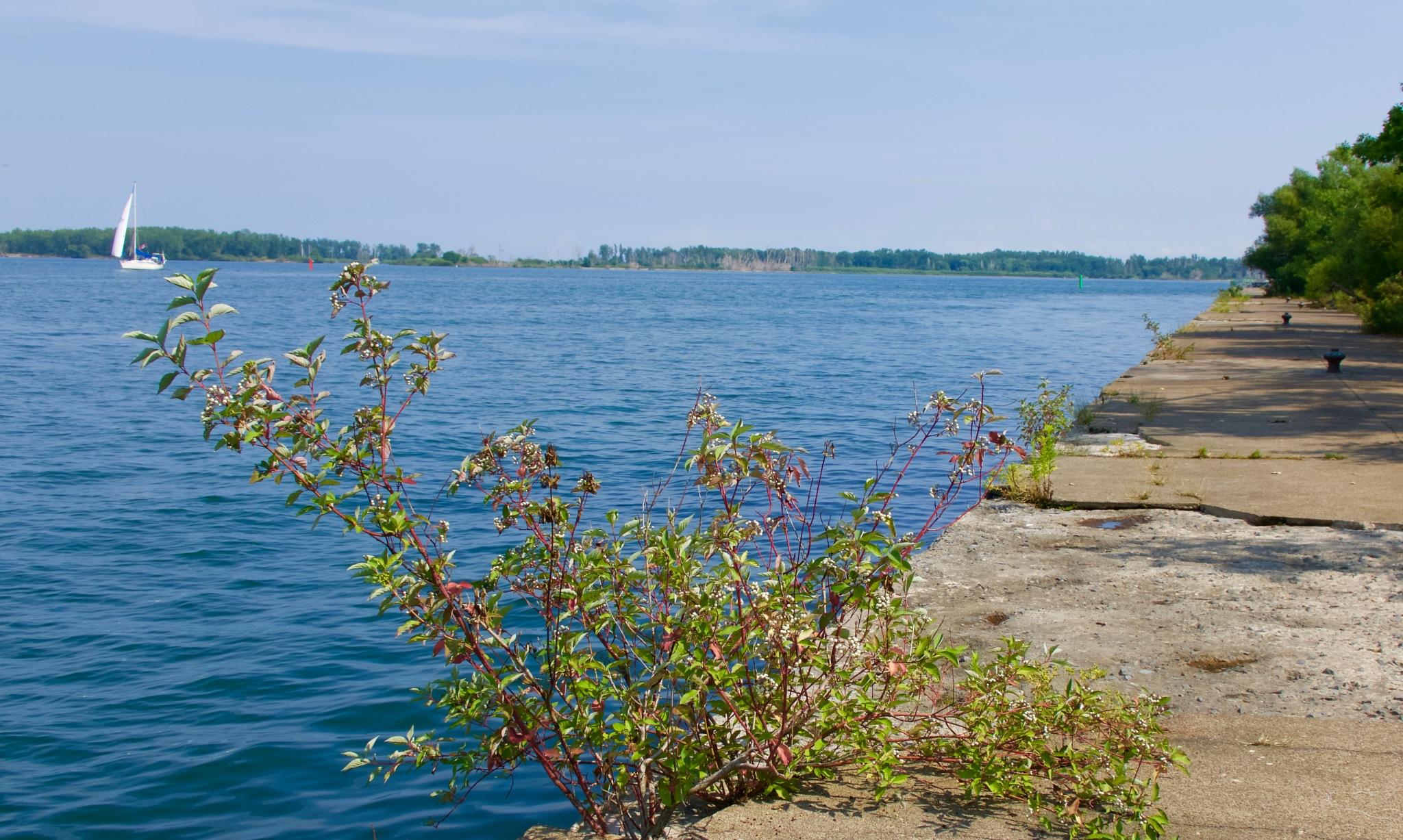 Ward's Island and Leslie Str Spit in the distance by Karen Bekker