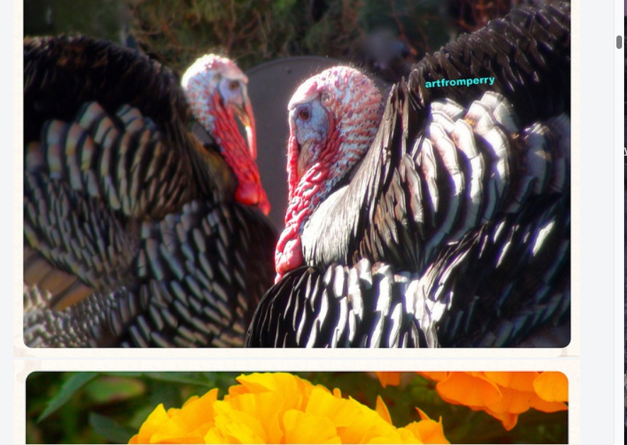 """""""Parade of Turkeys"""" artfromperry  by artfromperry02"""