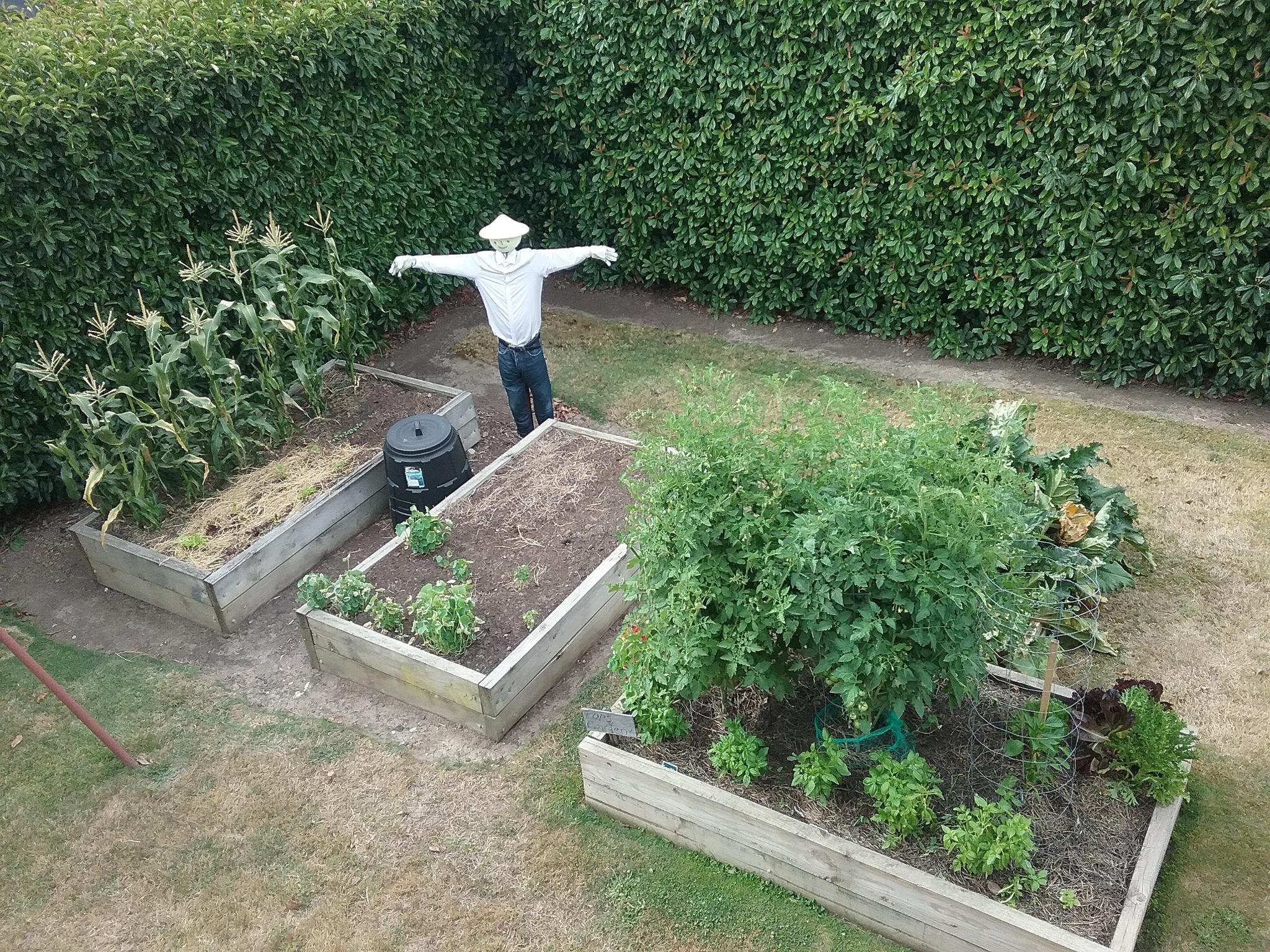 Vegie Garden by Leica Ross