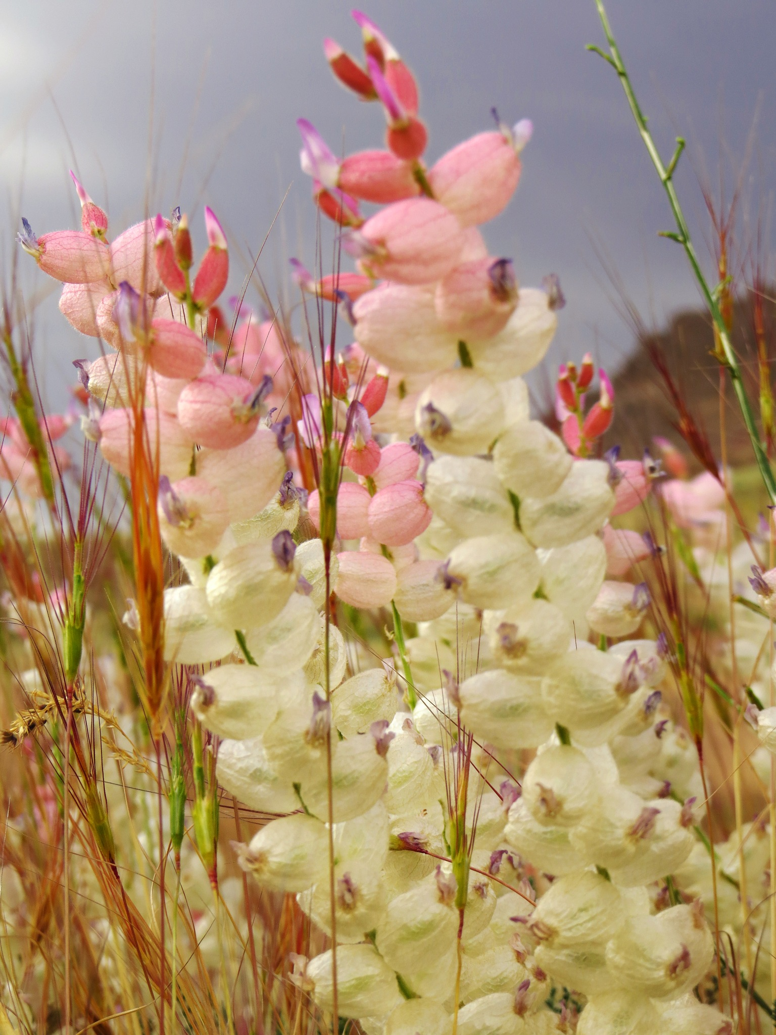 wild flowers by mahnaz fallahi