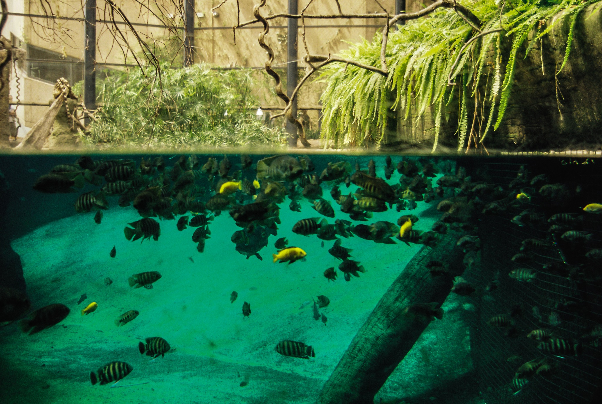 underwater world by Wiesława Dalecka