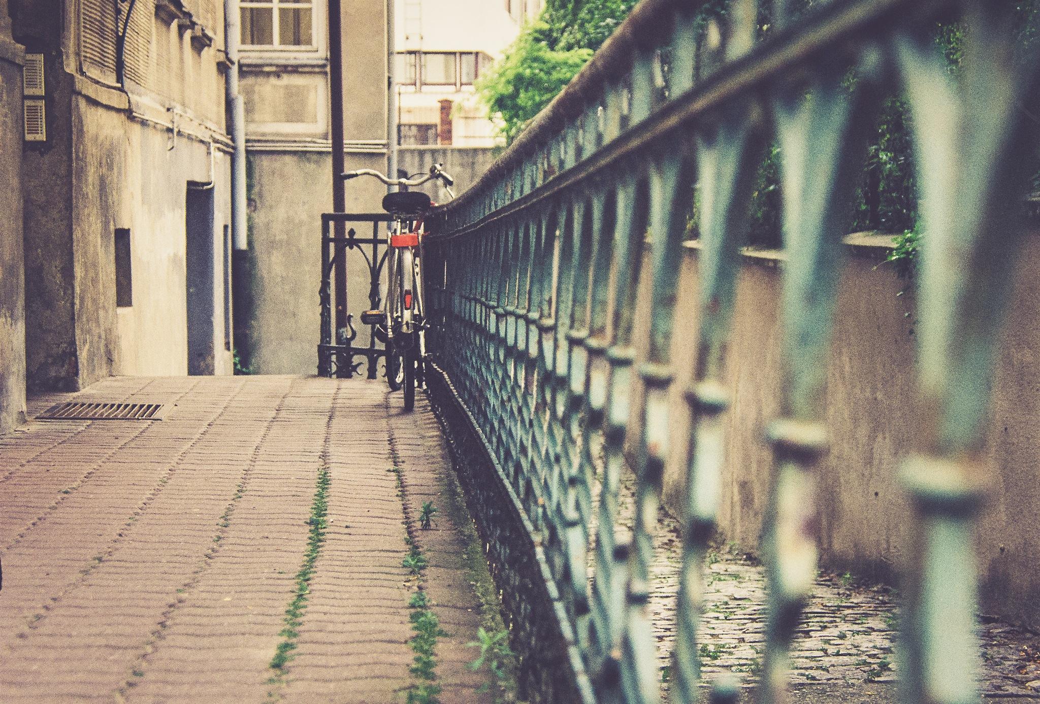 cycling by Wiesława Dalecka