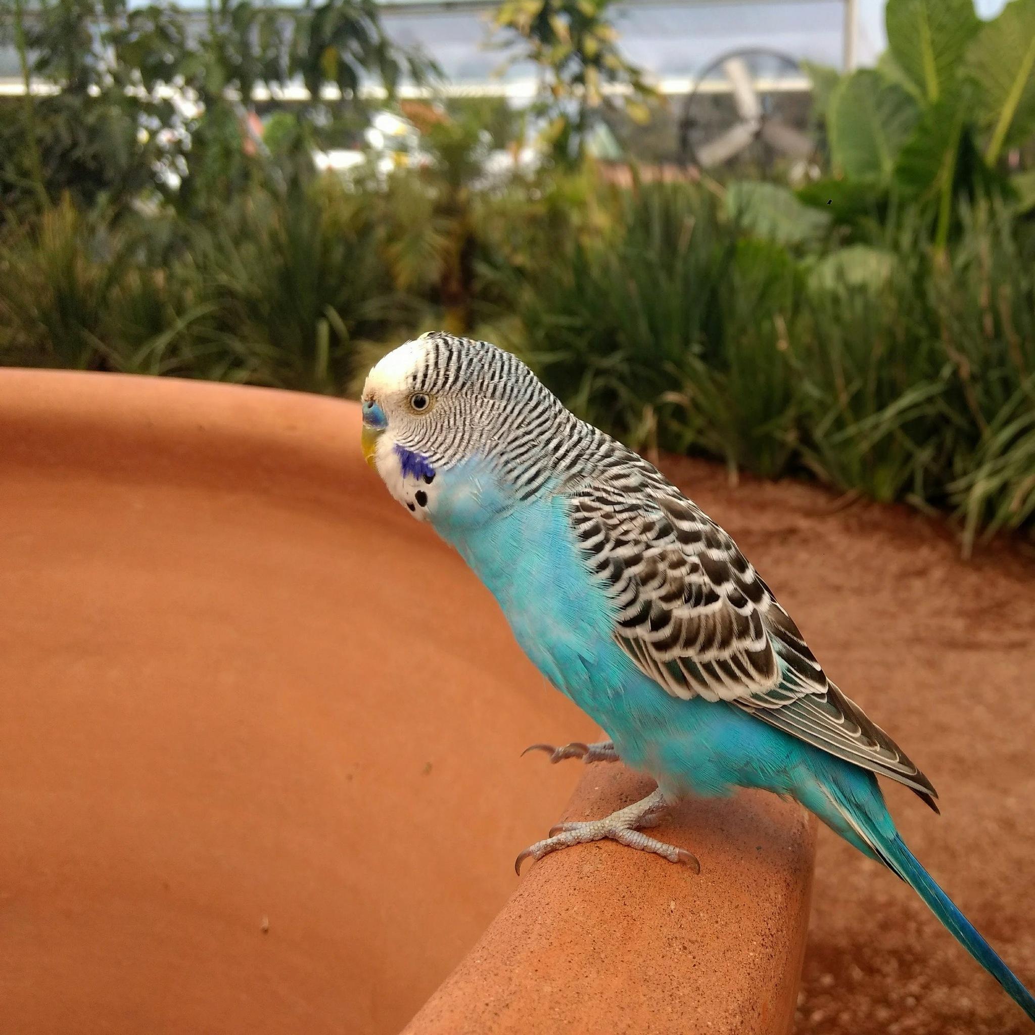 blue bird by Sebastian Betancourt
