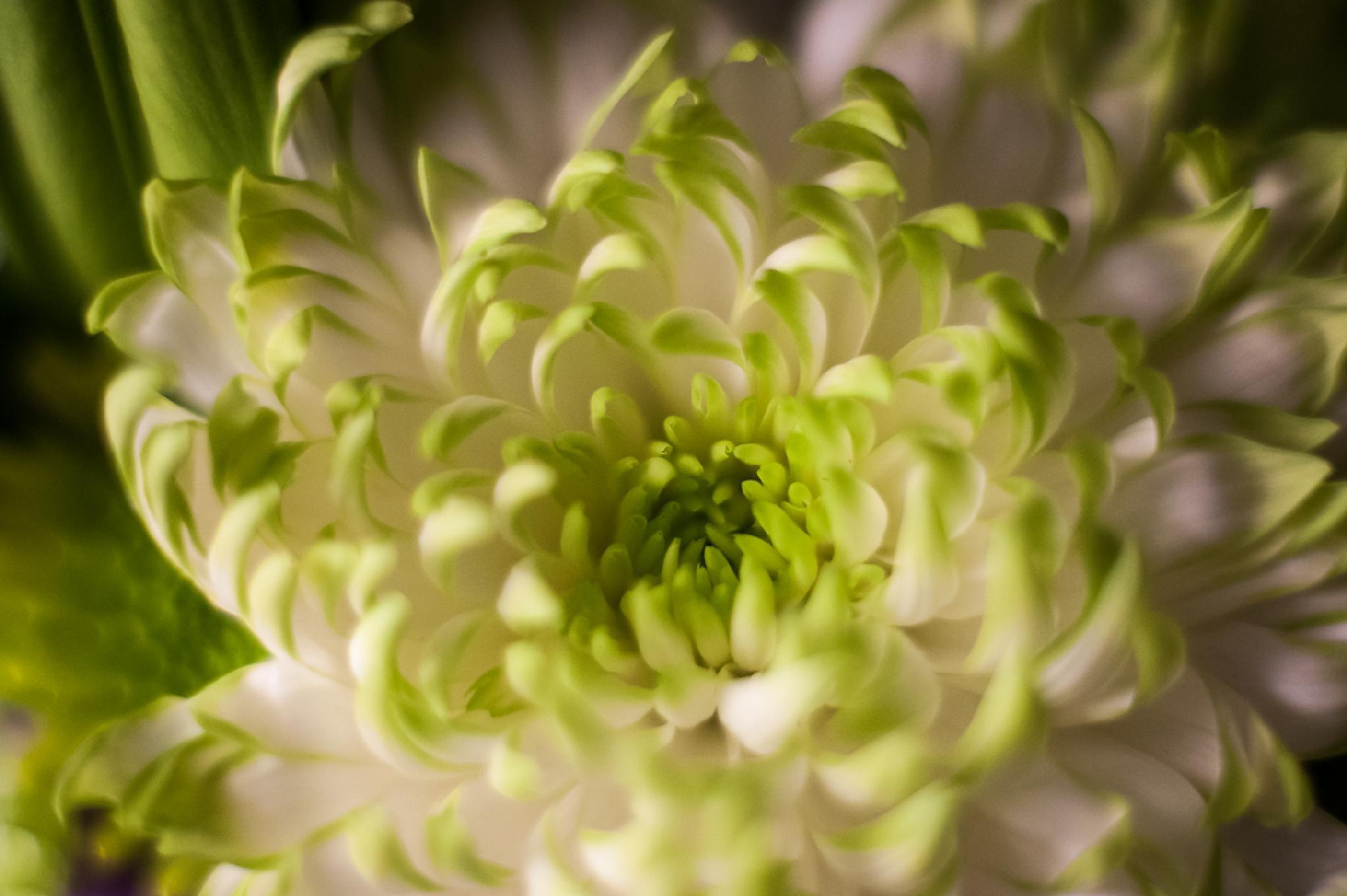 Flower by Elizabeth Funes
