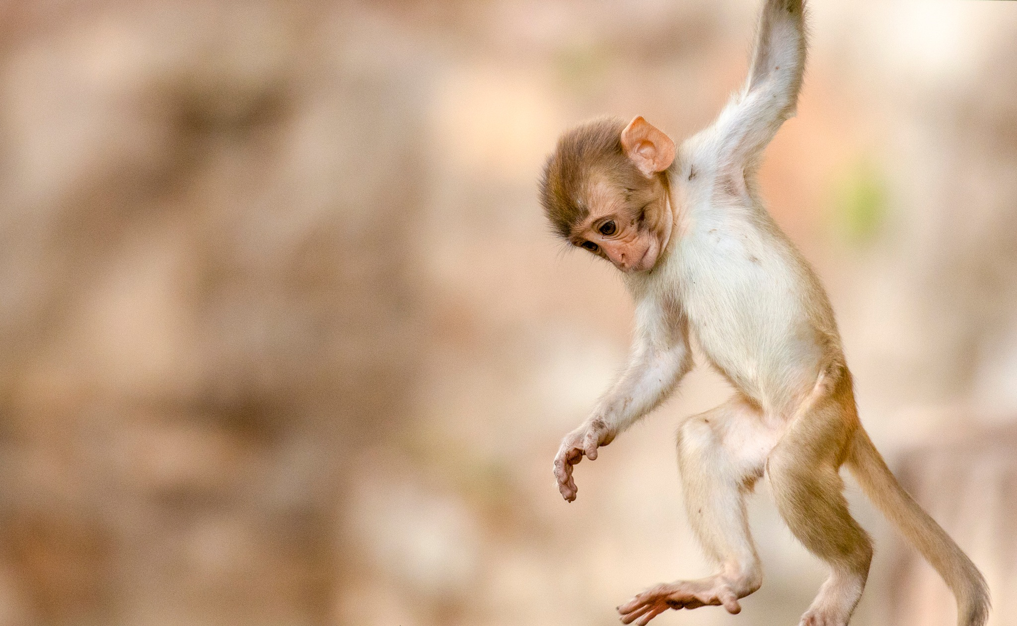 Let me show some moves by Ankit Shukla