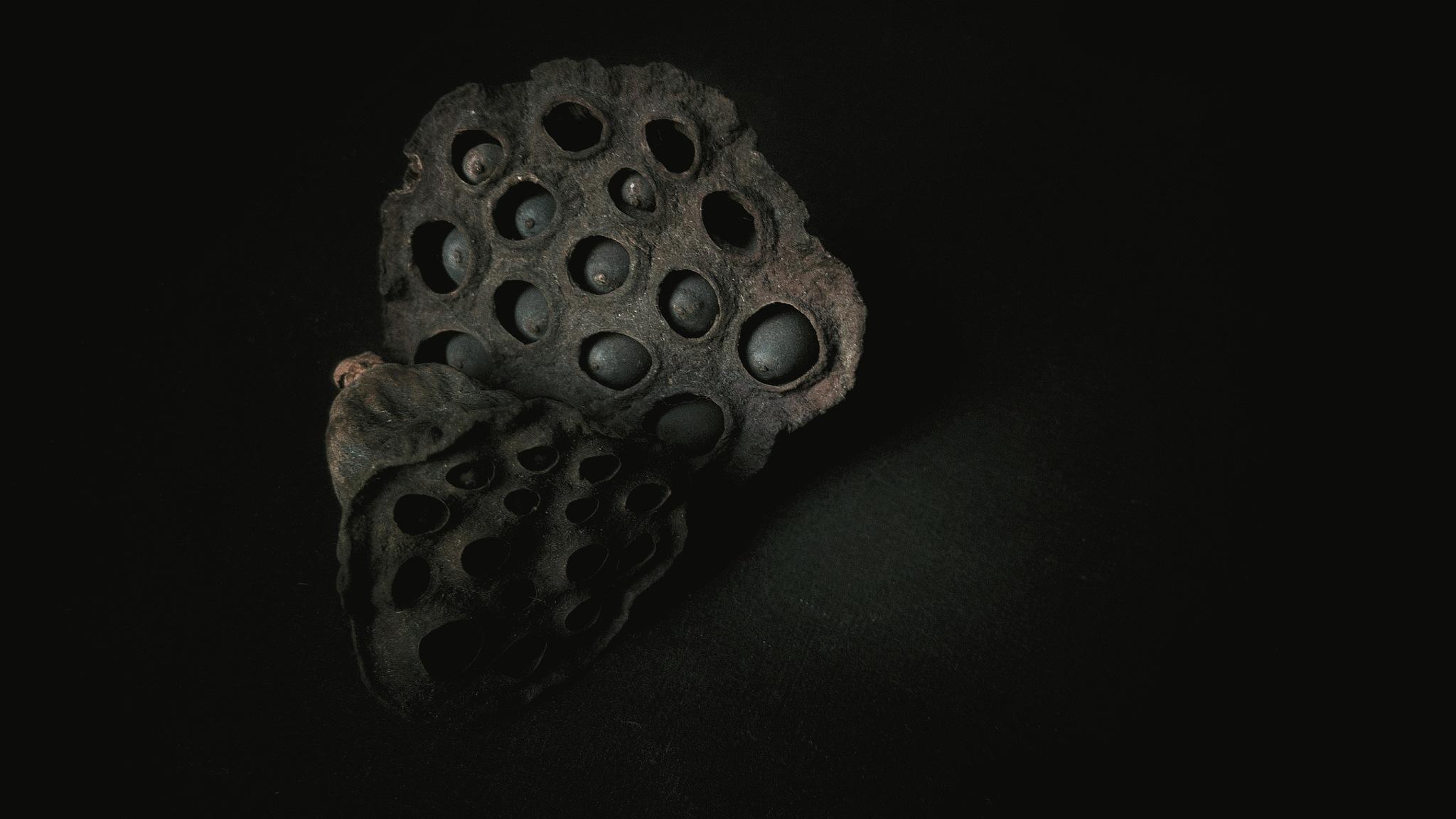 trapped seeds by Ludmila Kozinkova