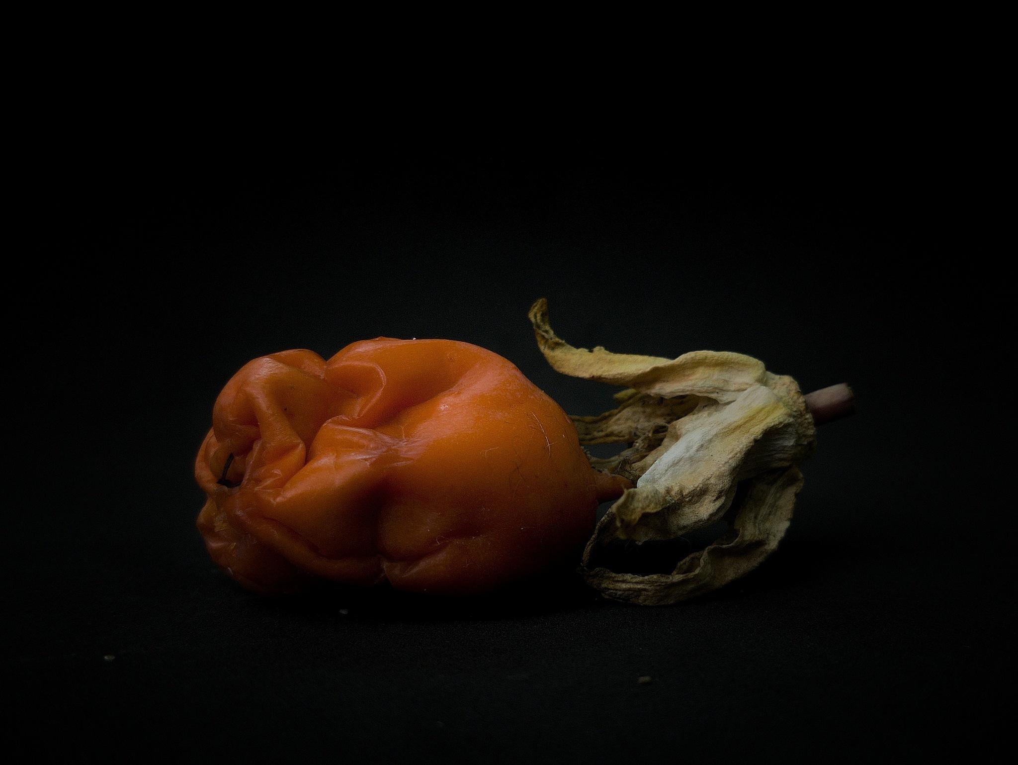 passiflora fruit by Ludmila Kozinkova