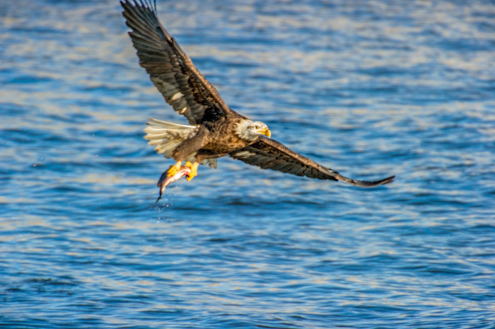Fishing by David Neesley