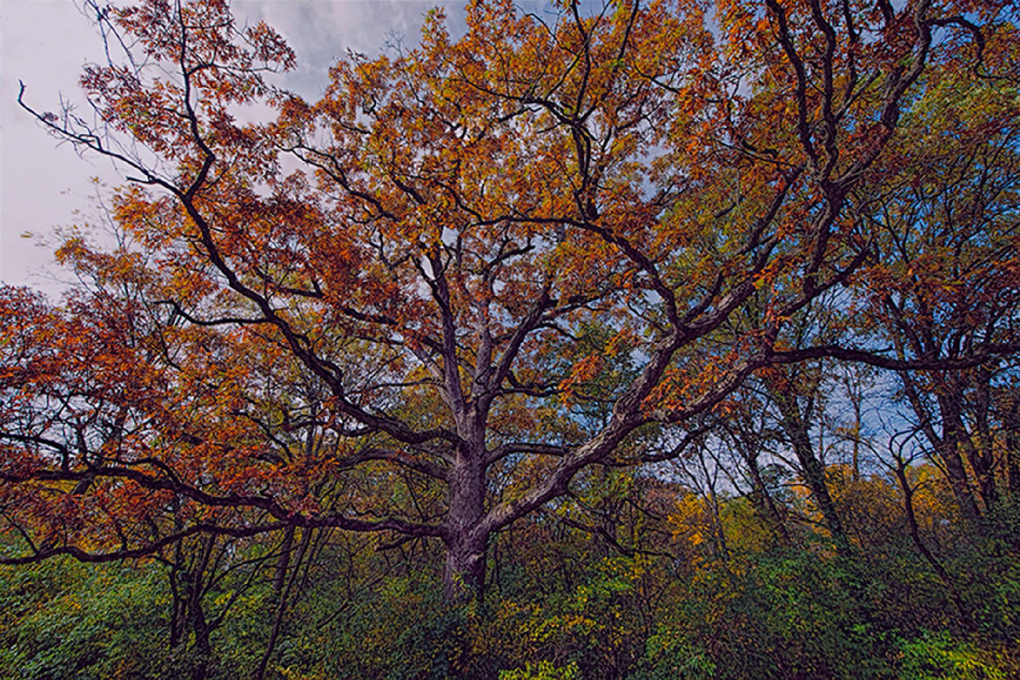 The Mighty Oak by David Neesley