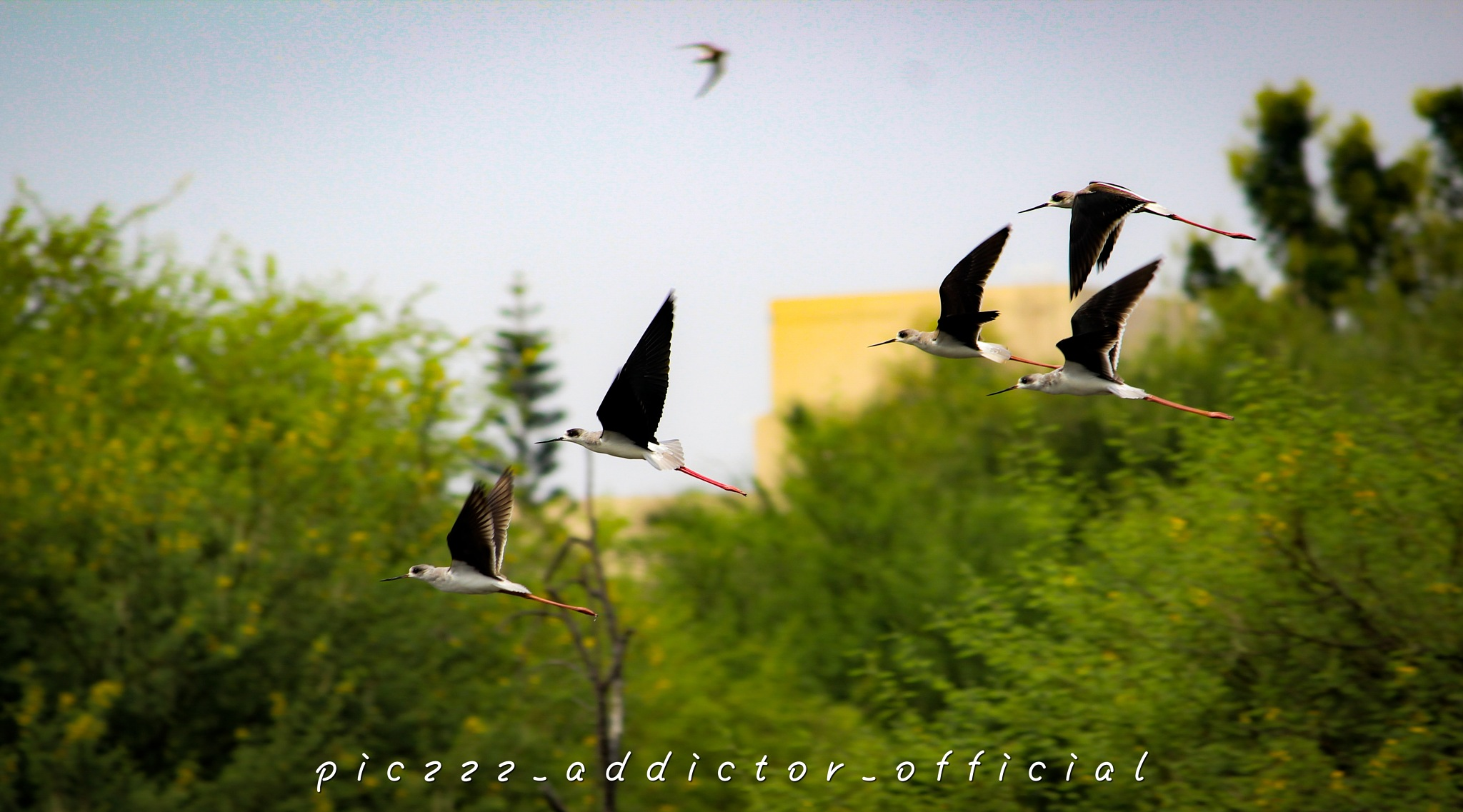 Untitled by Piczzz_addictor_photography
