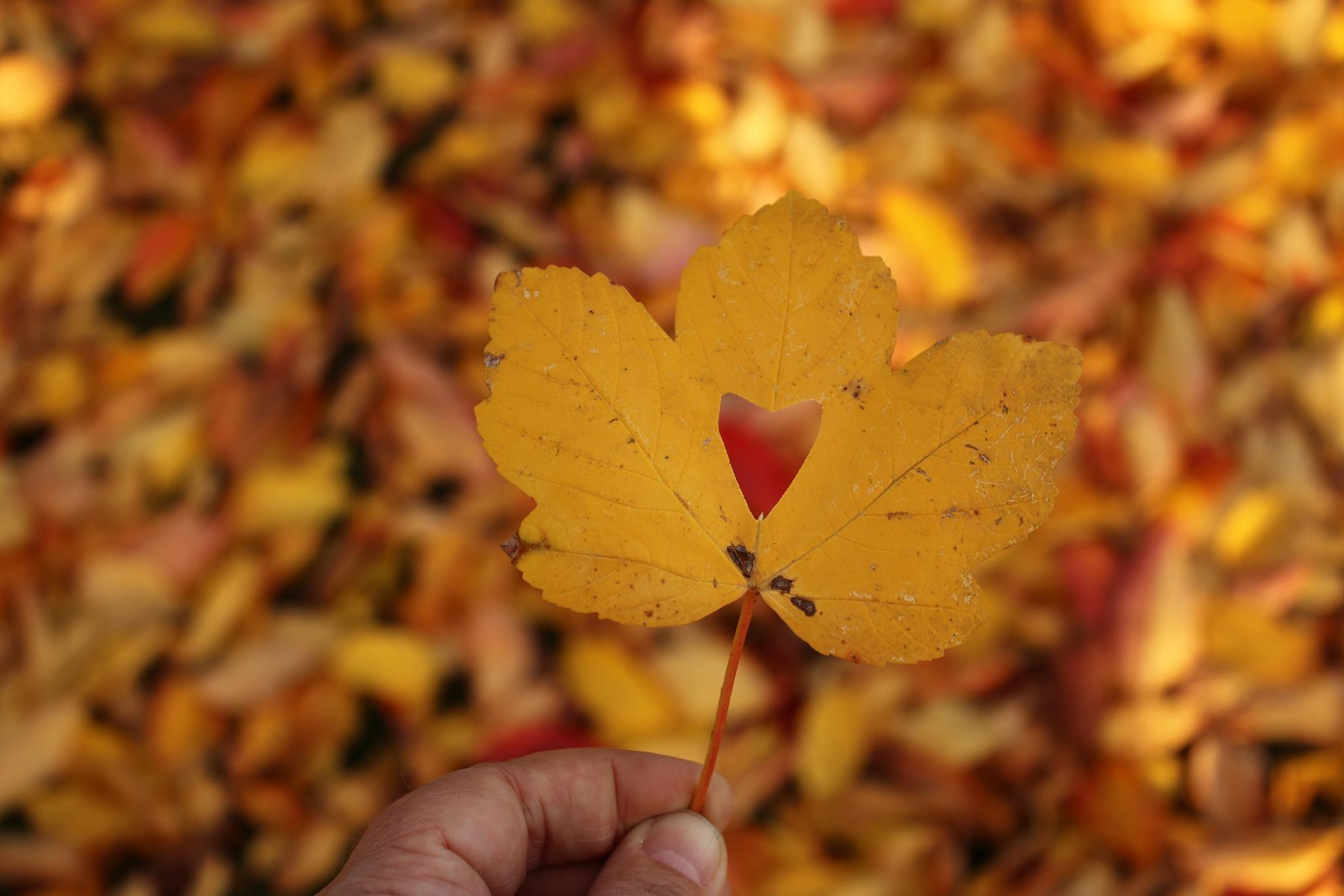 Autumn colors  by Cathrine Strømø