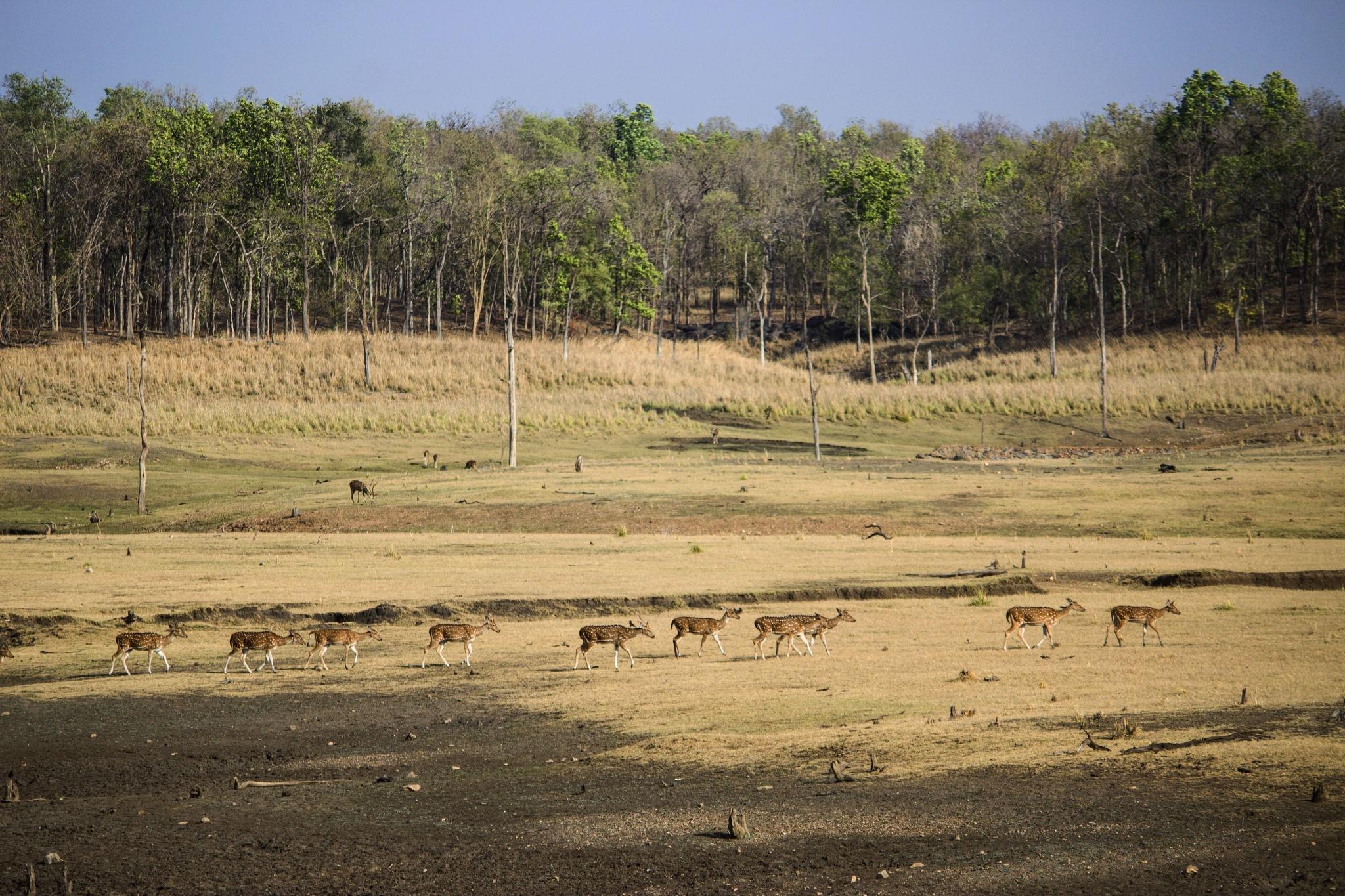 The land of Animals by Piyush Mishra