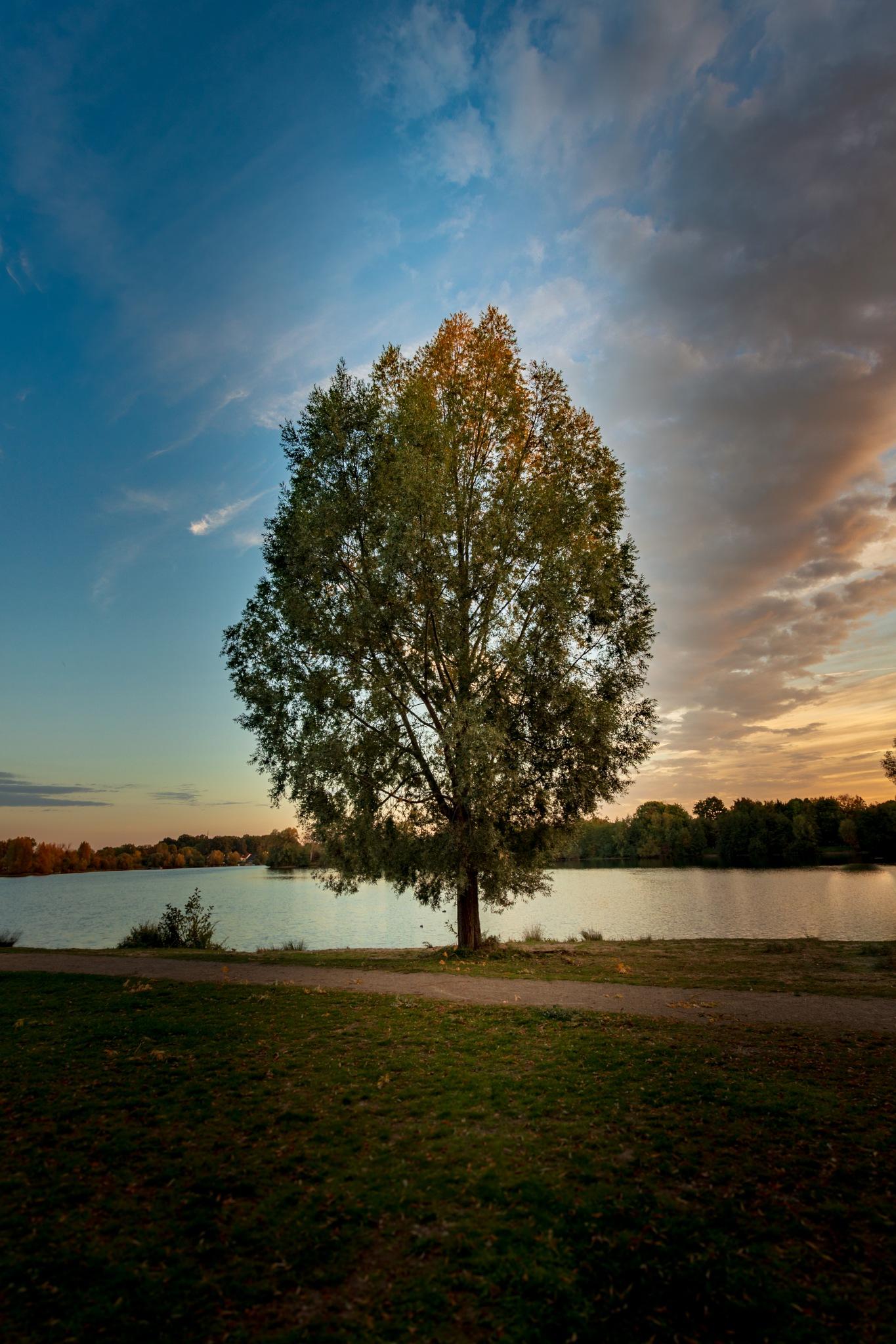 Tree at Lago Laprello by Rene Hilgers