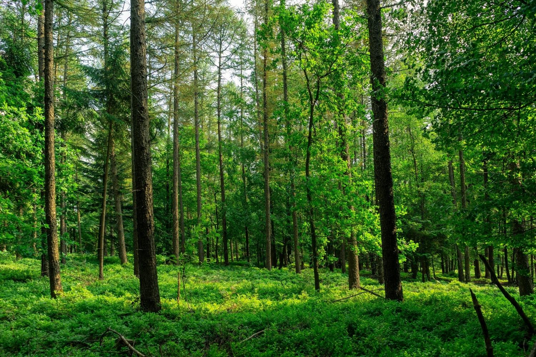Trees Of Wulsbüttel by Adam Weh