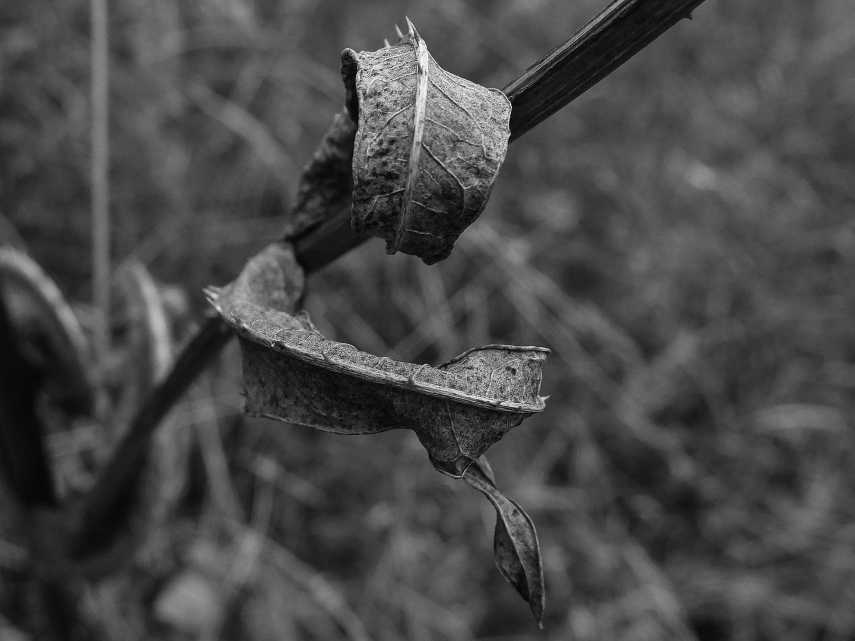Winter Leaves by Bryn Graves