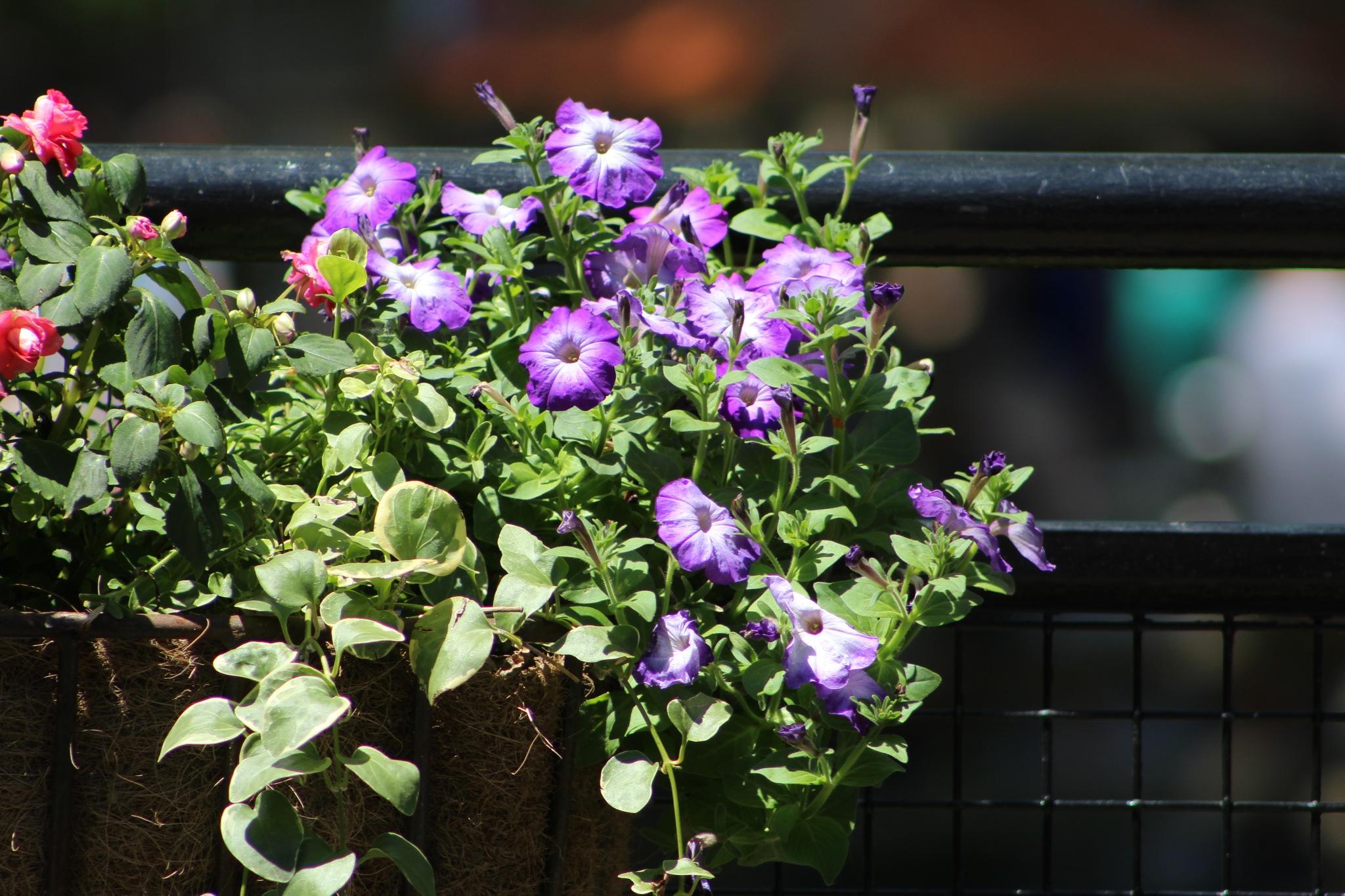 Purple by Monica