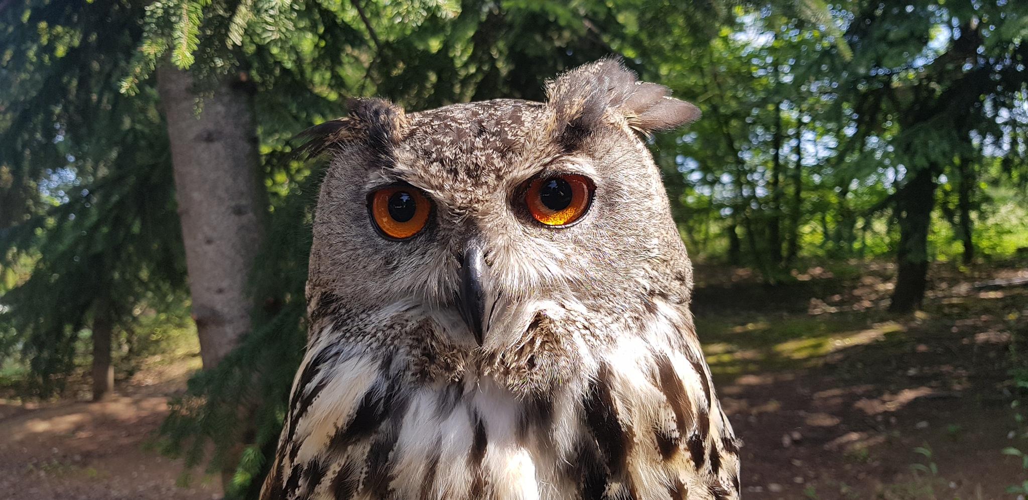 Owl ❤ by luciaesposto8