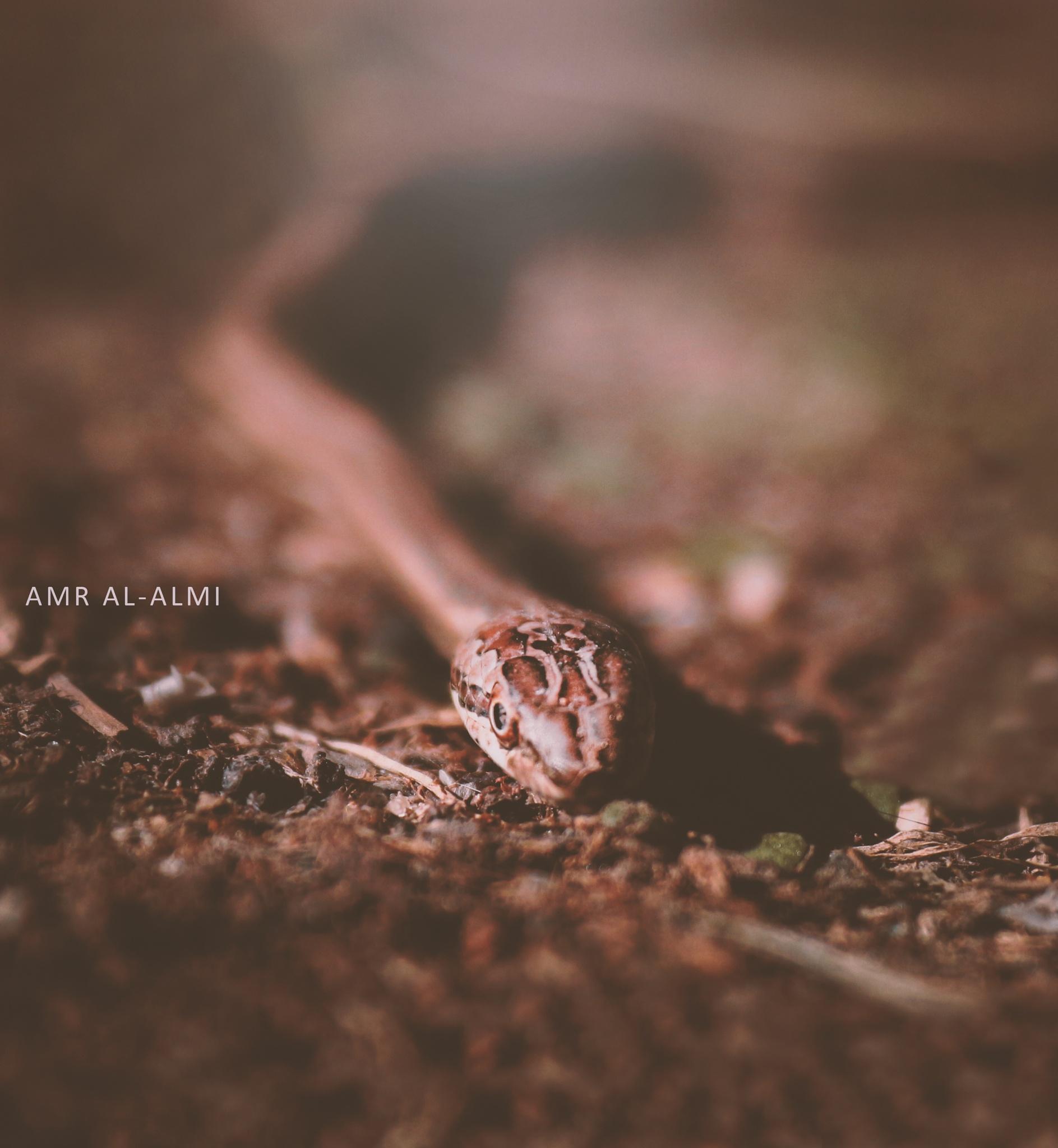 o by Amr Al-almi