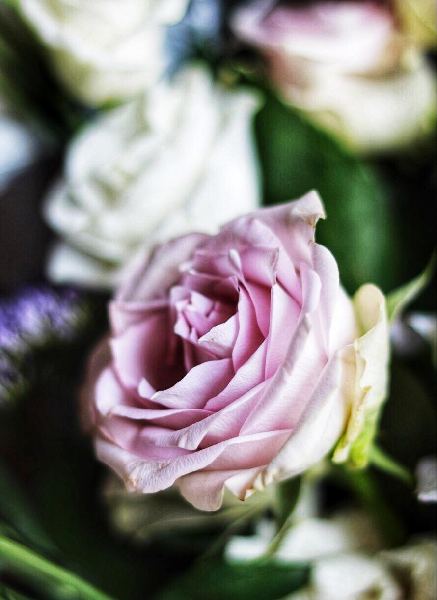 Rose by zalikiev