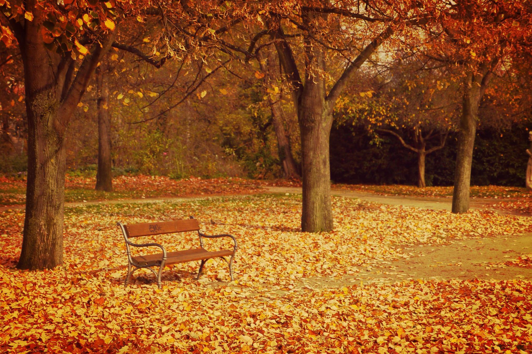 Lonely bench by Veronika Duzekova