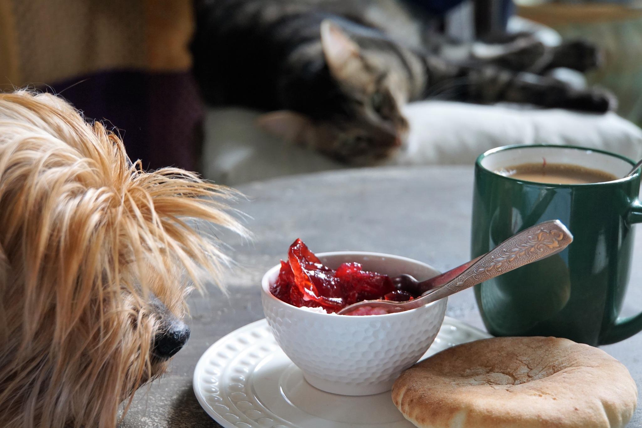 Hunters for my breakfast. by Ekaterina Fradkin