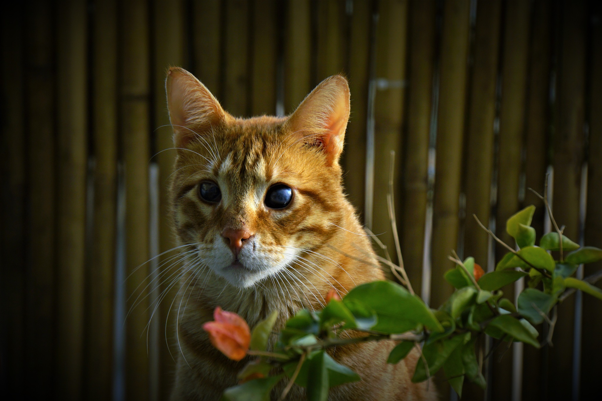 My blind cat. by Ekaterina Fradkin