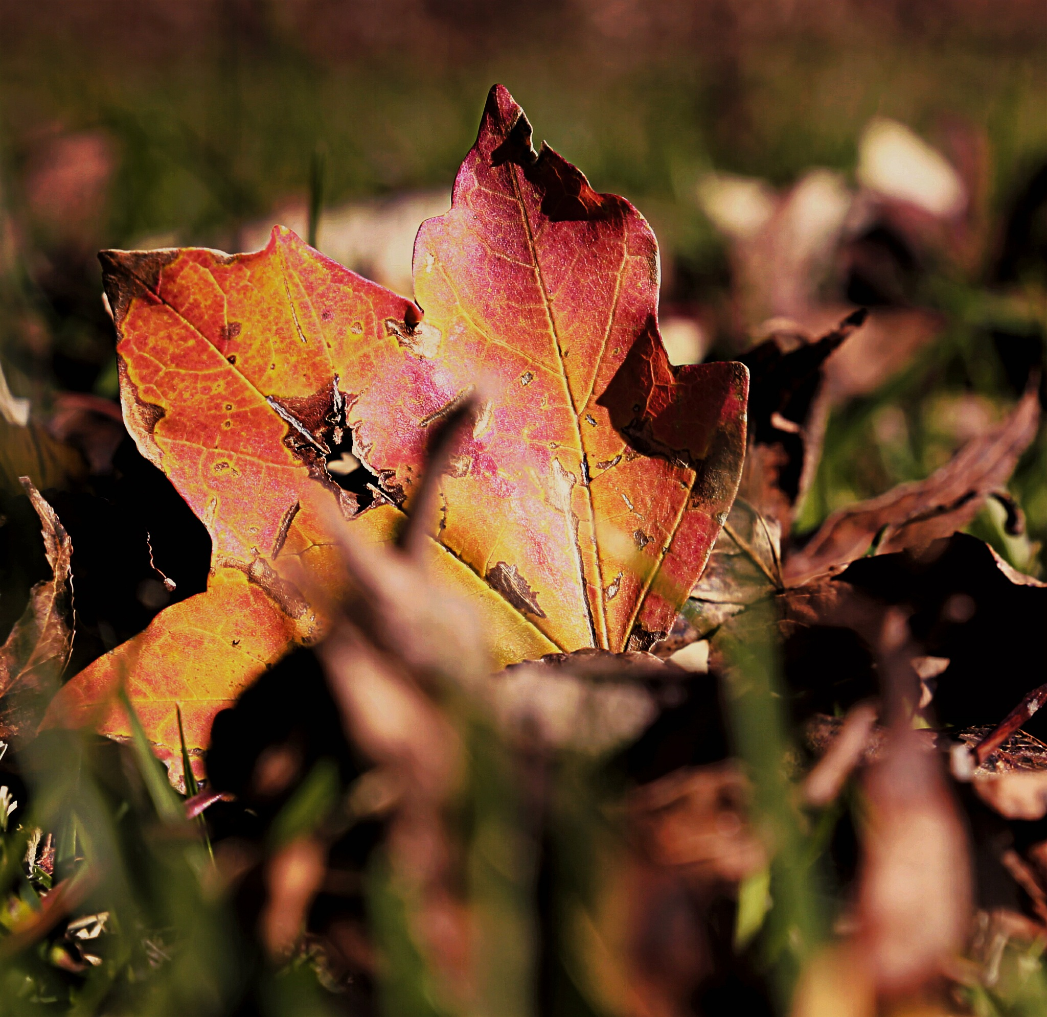Autumn is in Session by JayeEryk