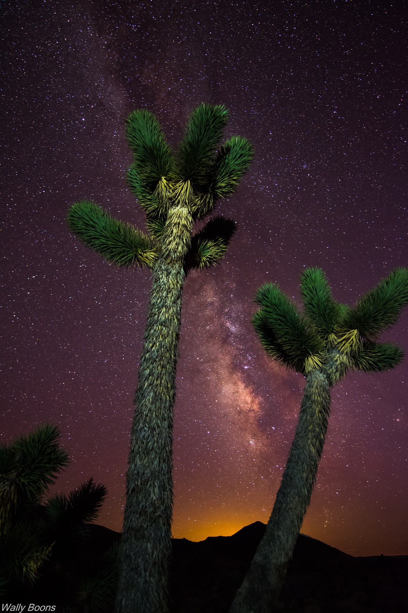 Twin Joshua trees and the milky way by Wally Boons