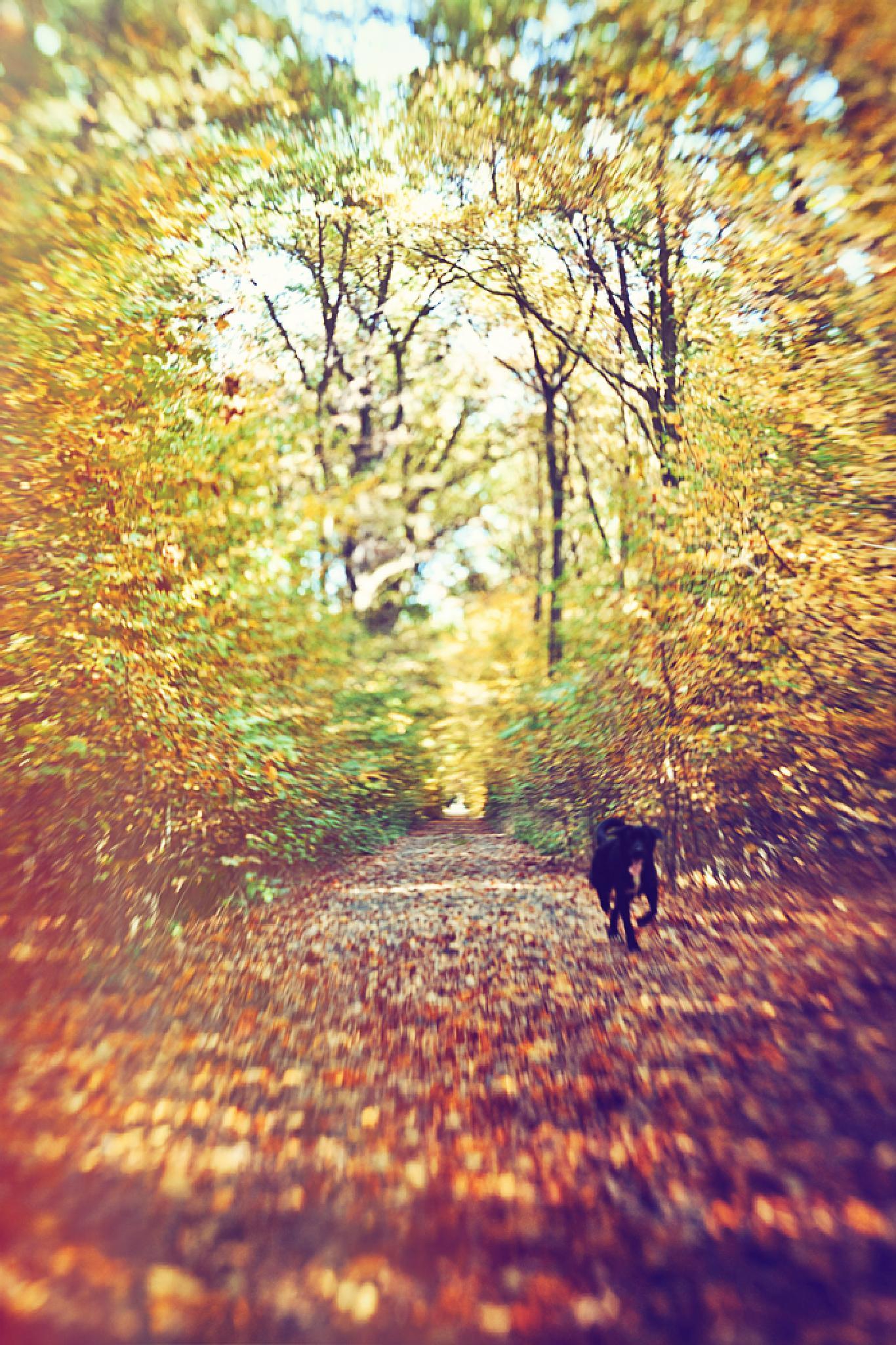 walk by Helena Kučerová