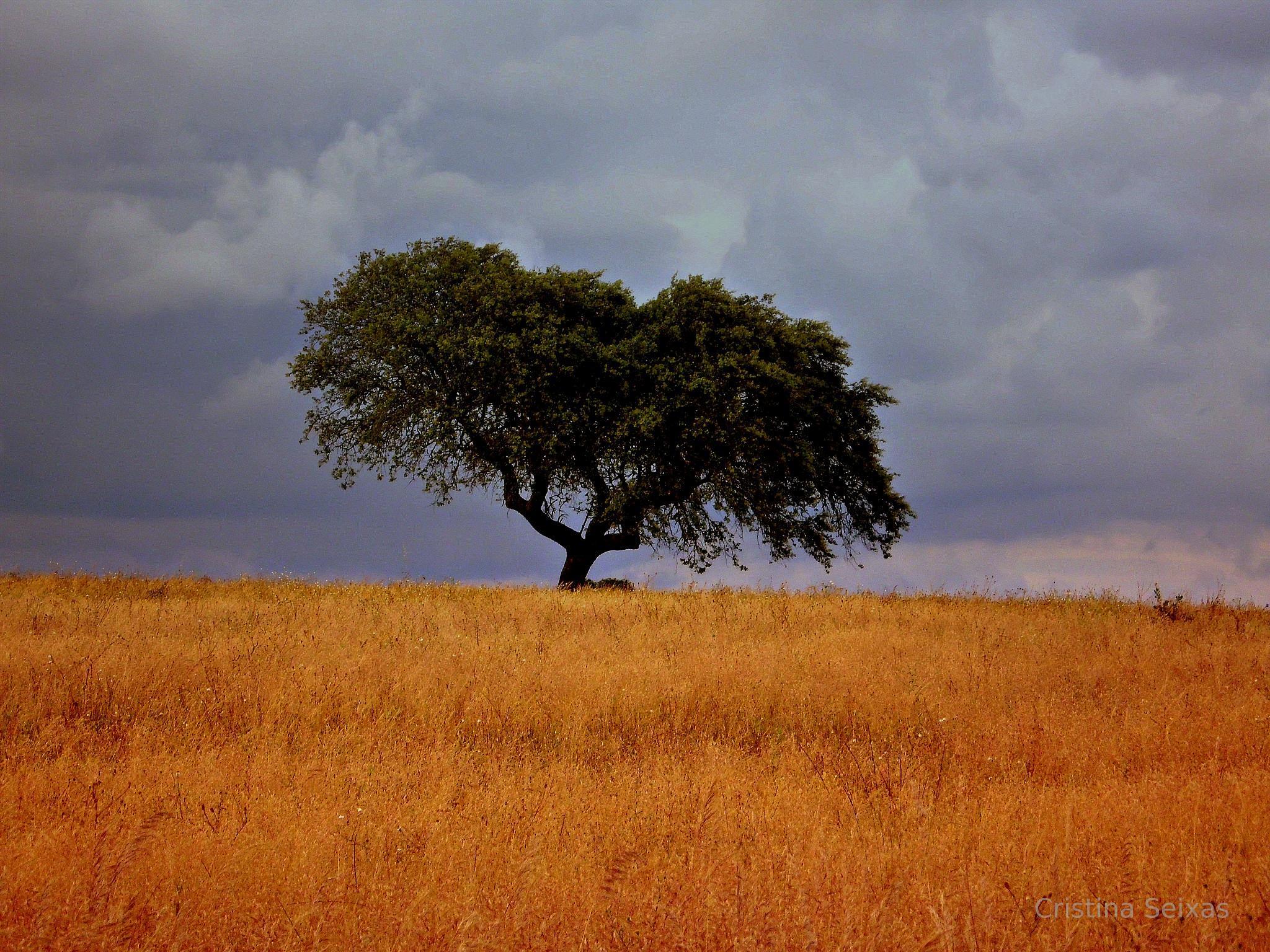 Yellow field by CristinaSeixas
