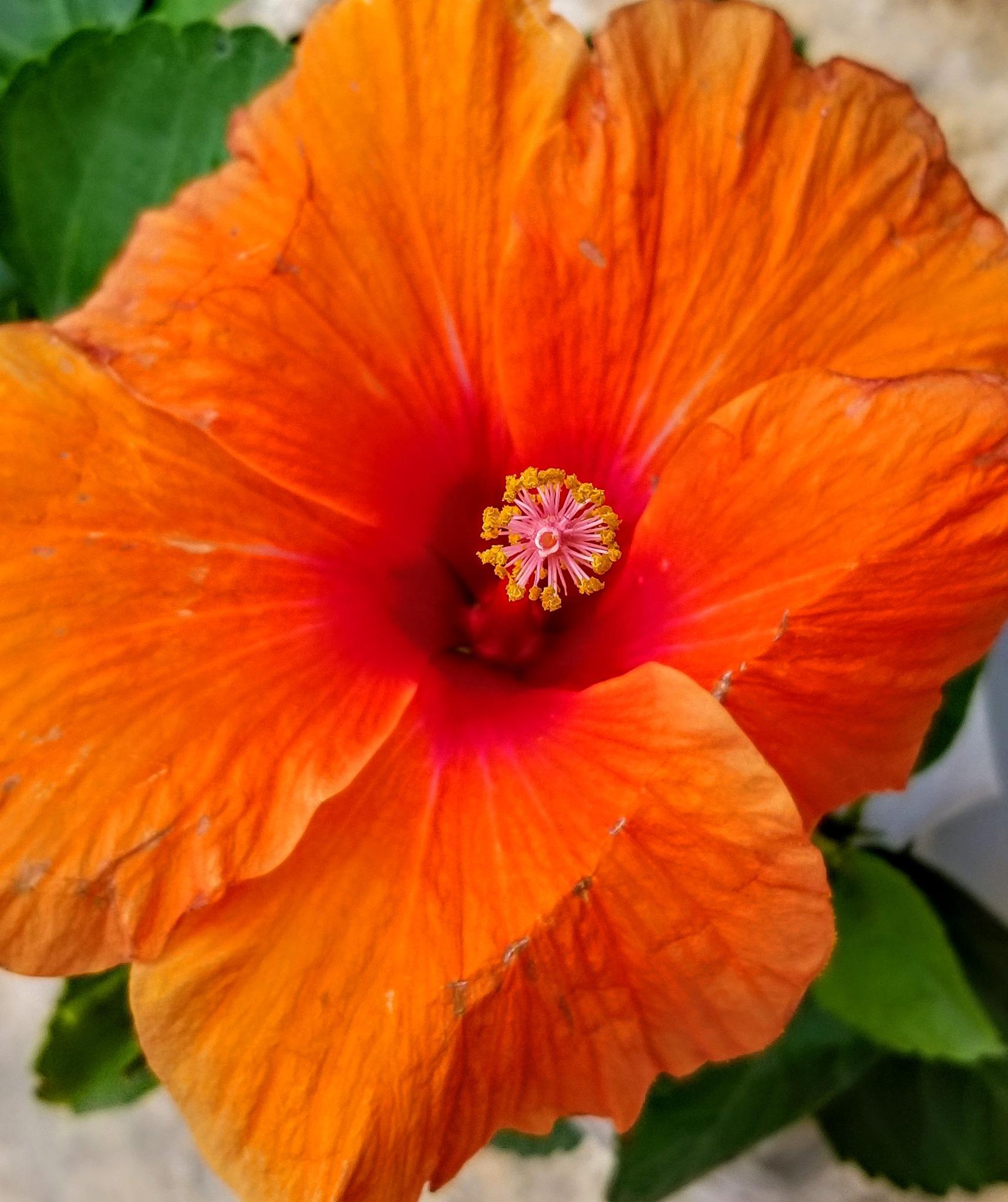 flowers  by Rajini Singh