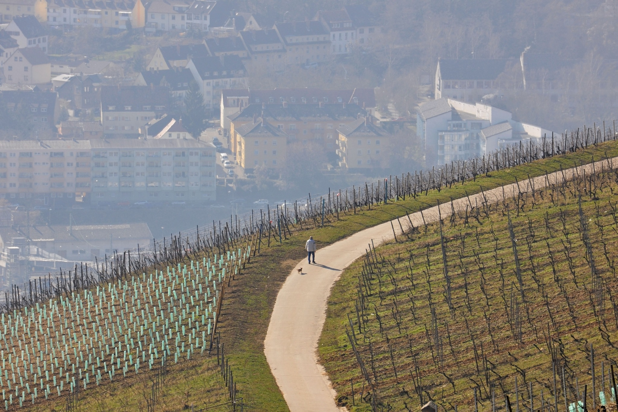 Walkin' the Dog - Over the Rhine Valley by Hartmut Ustorf