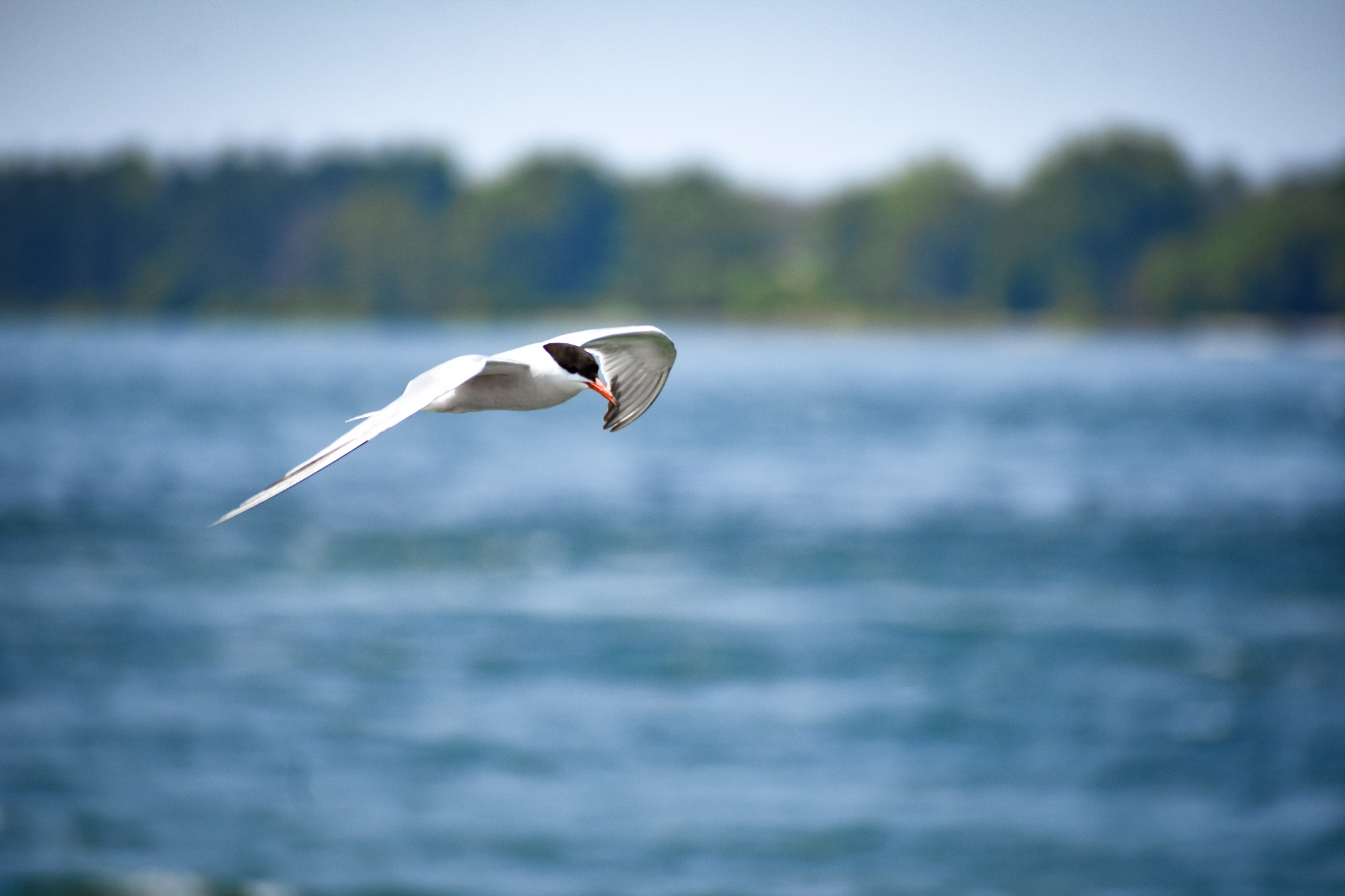 Fly Away by Brian Dobrick