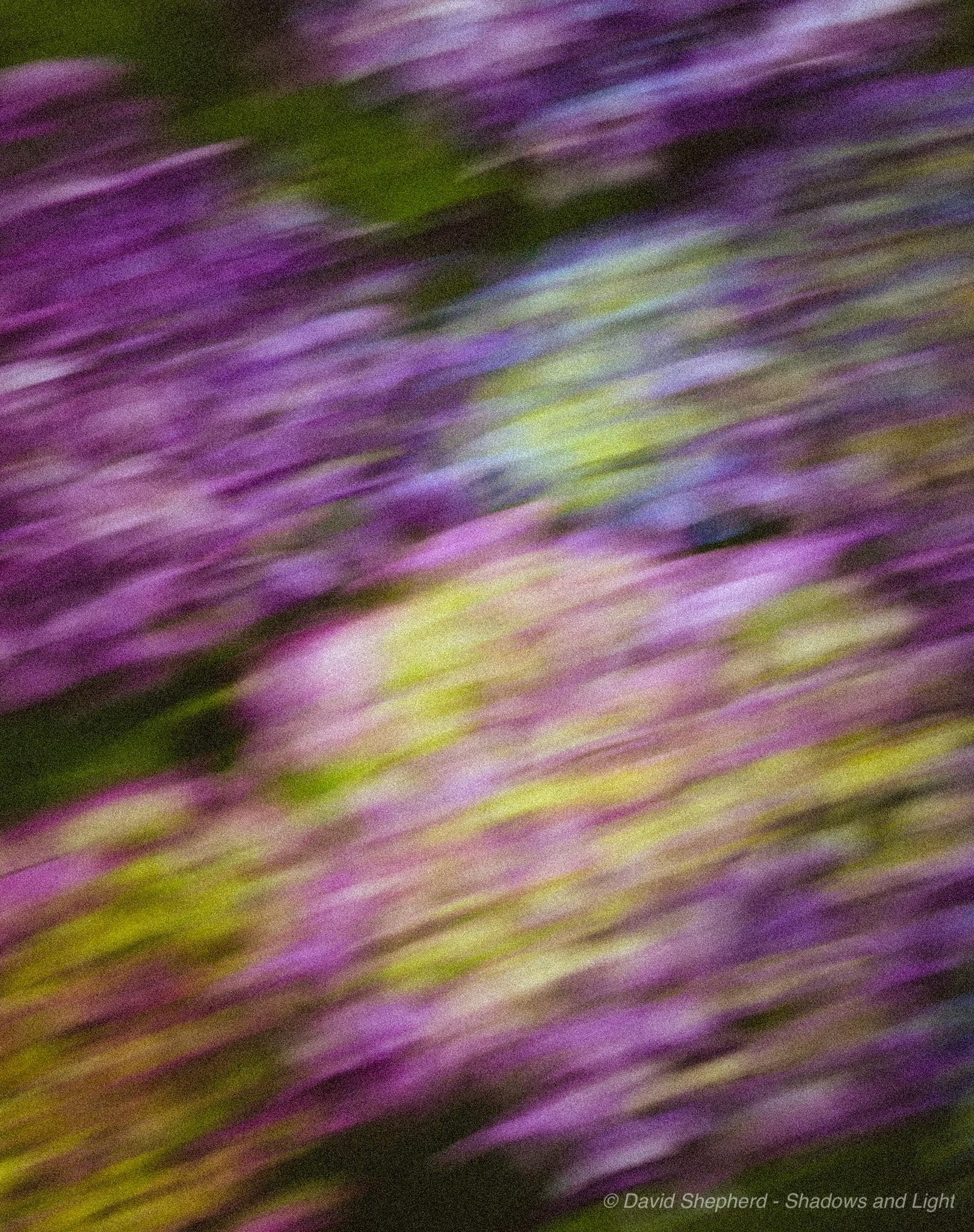 Abstract Hydrangeas  by David Shepherd -              Shadows and Light