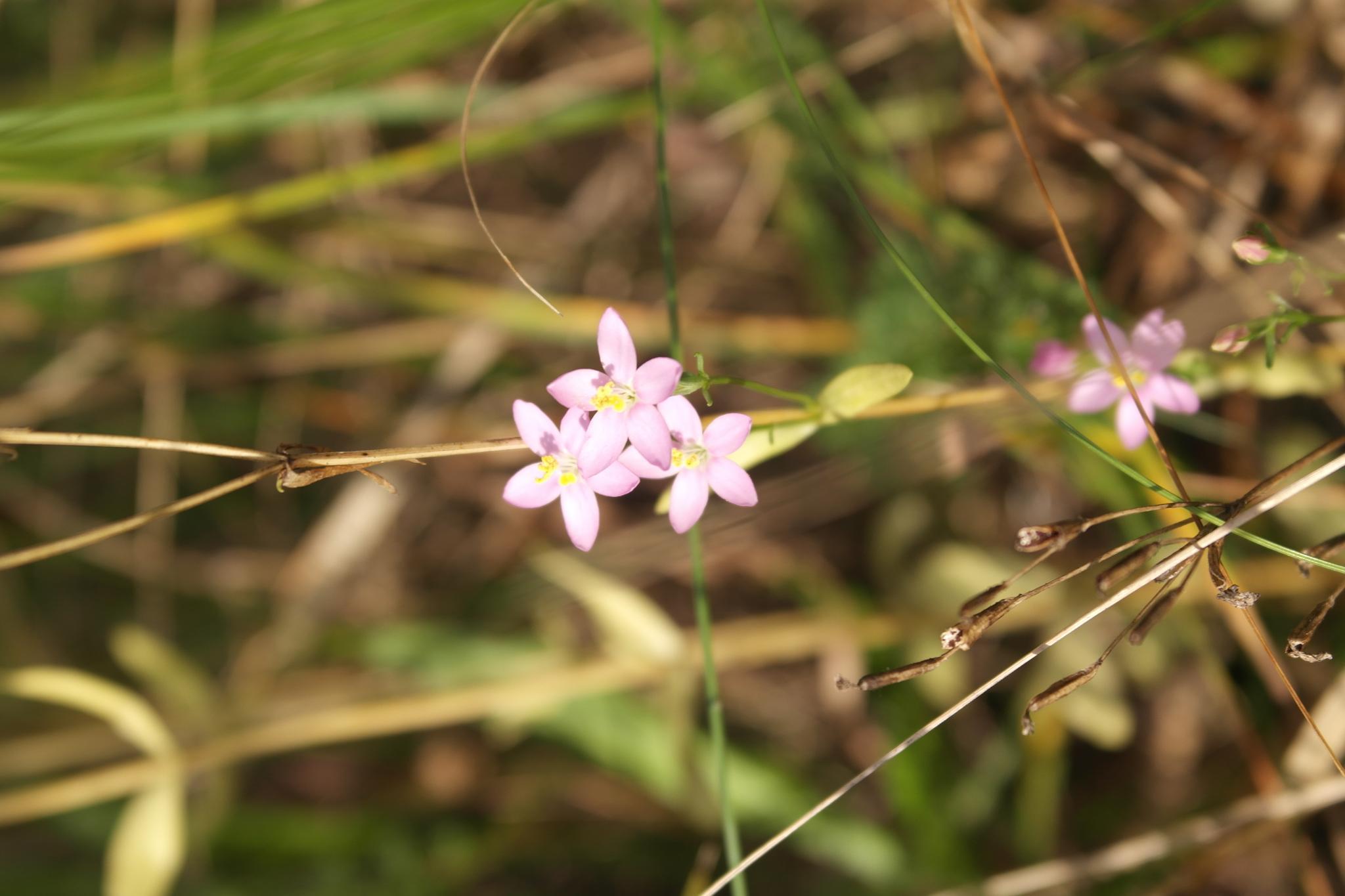 Kwiatki by   Ewa