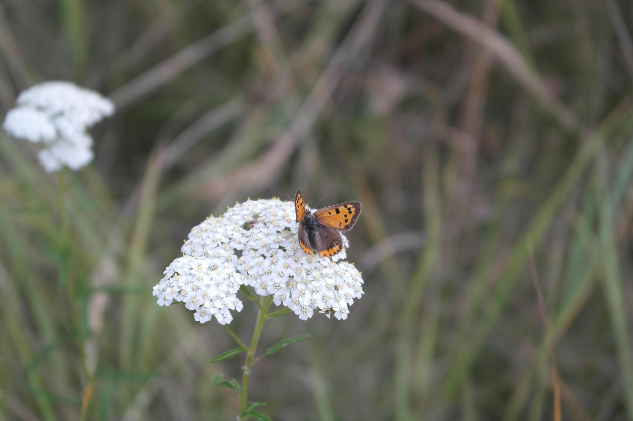 Motyl na kwiatku by   Ewa